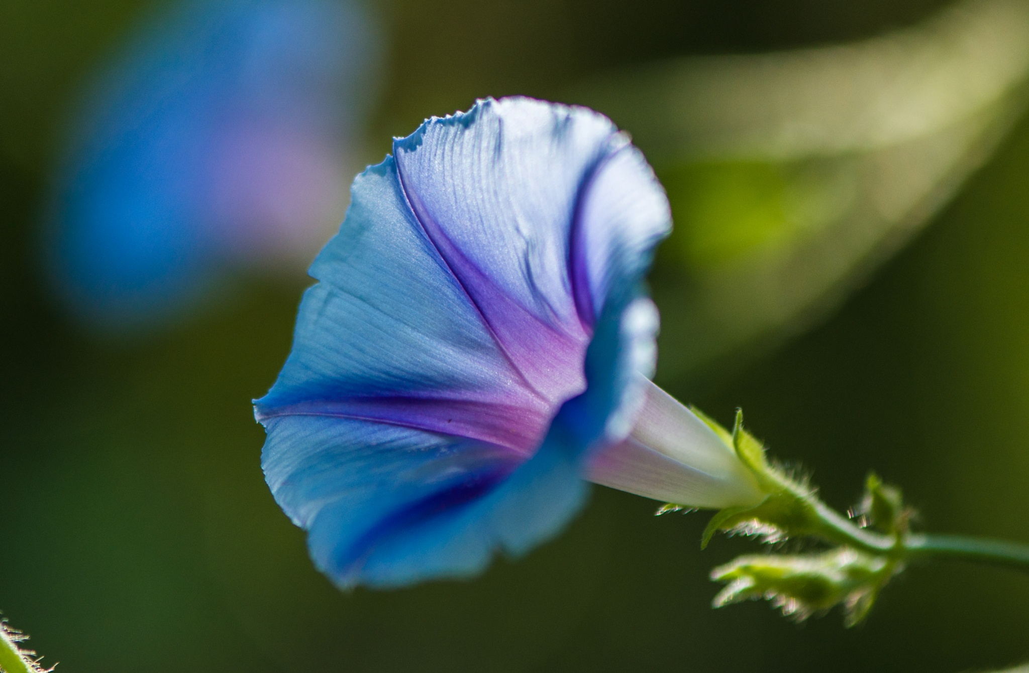 We..... by Frederic Gombert