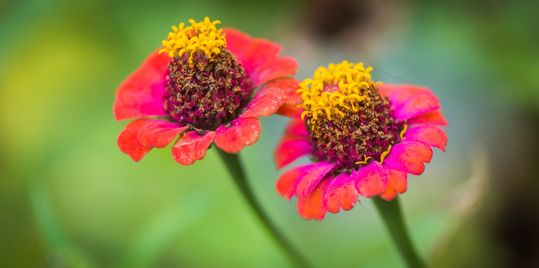 in the autumn garden by Frederic Gombert