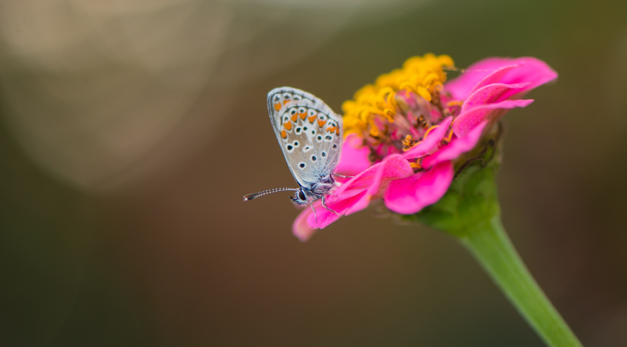 Waiting for the Autumn by Frederic Gombert