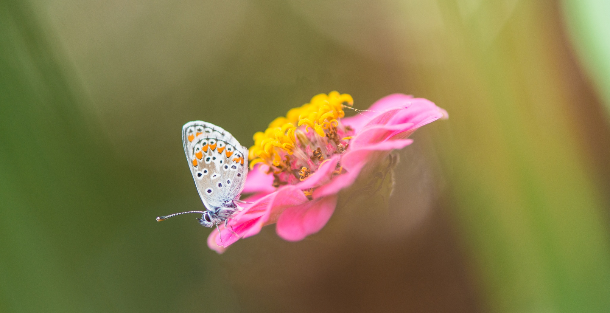Sweet Autumn by Frederic Gombert