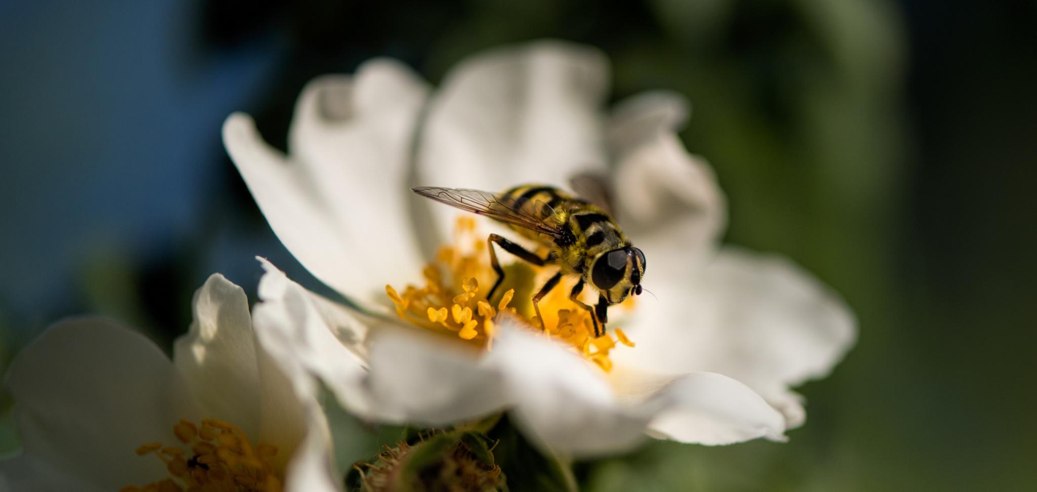 Bee portrait breakfast by Frederic Gombert