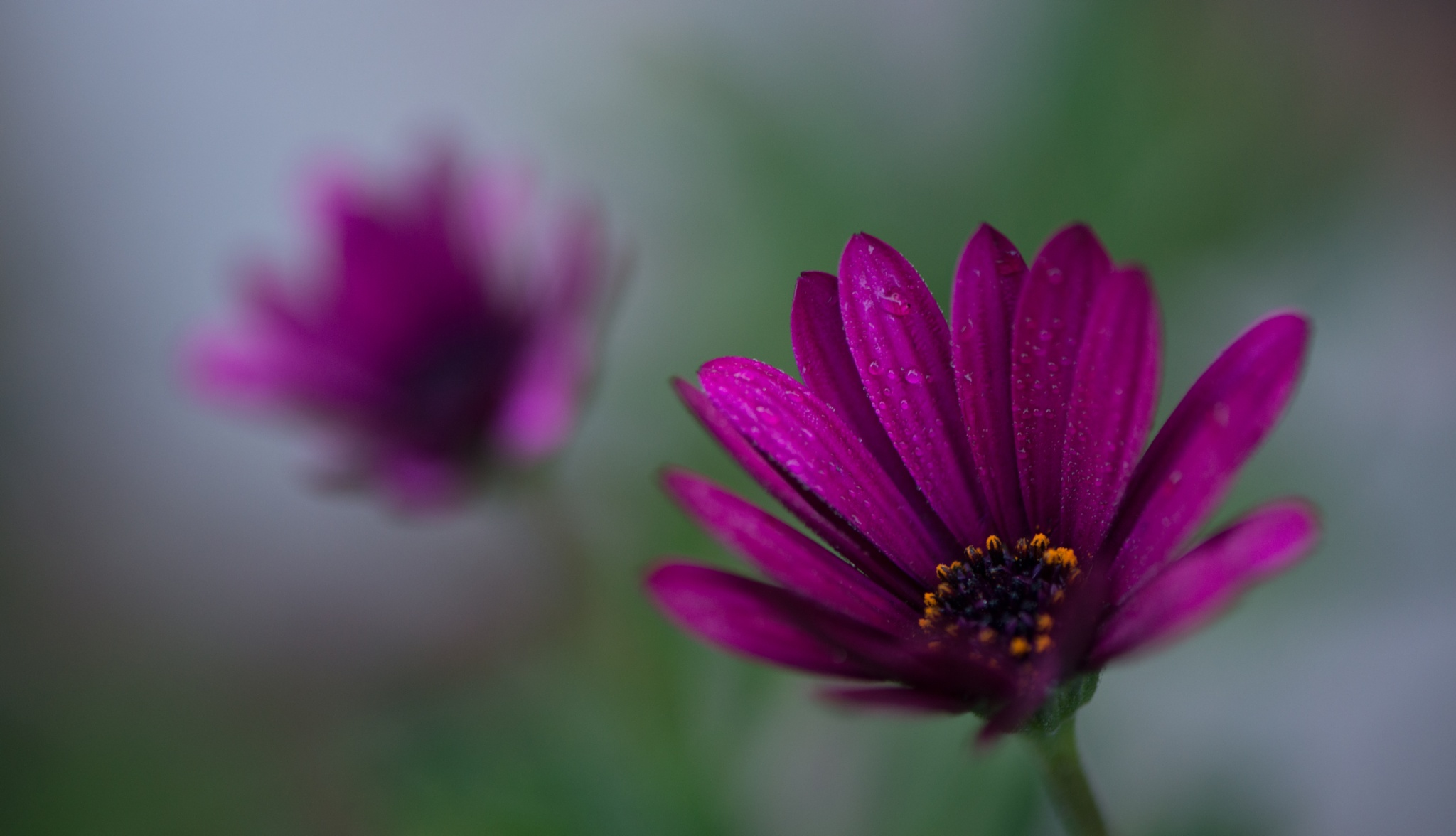 Autumn morning by Frederic Gombert