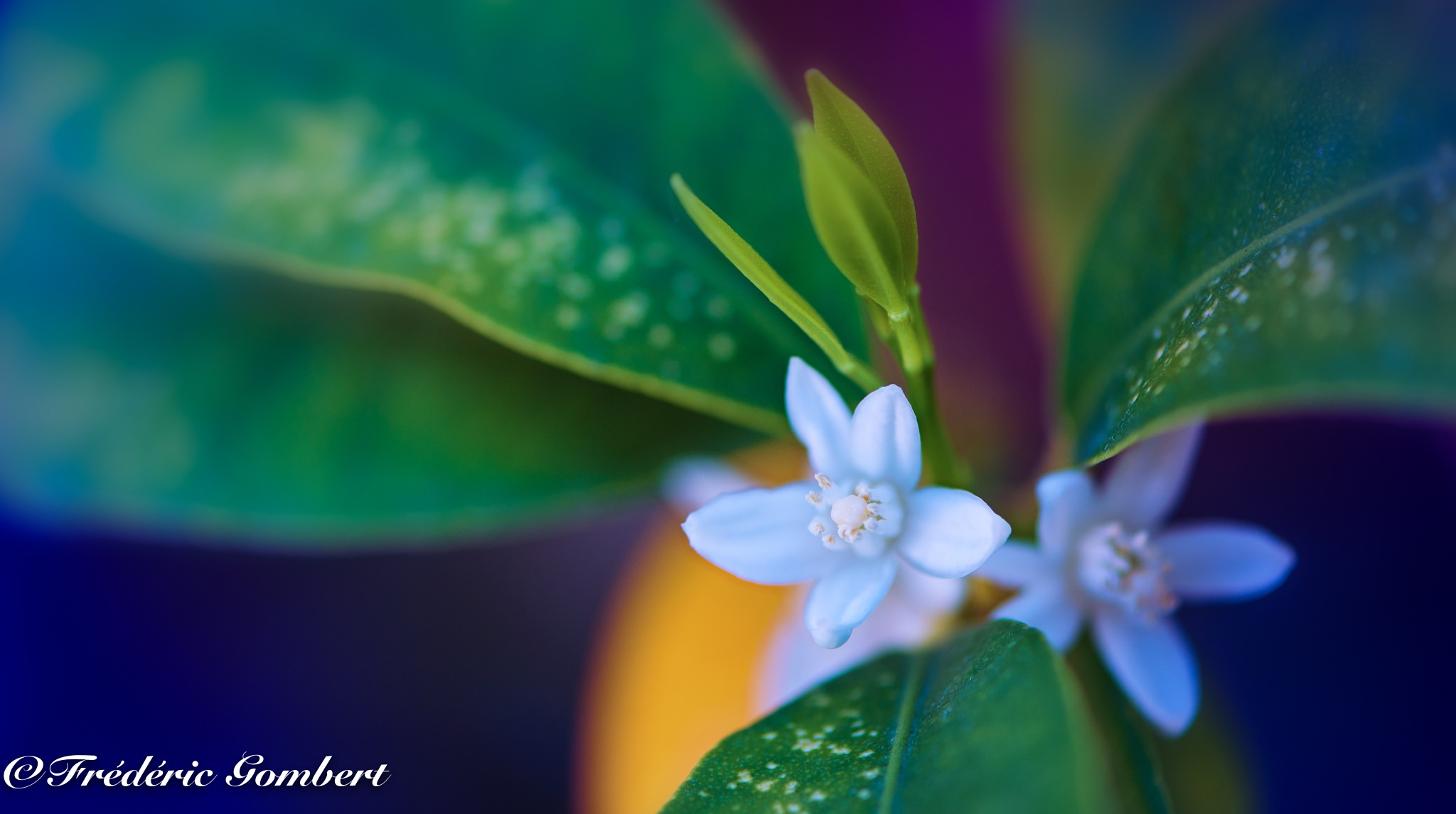 Story of Spring by Frederic Gombert