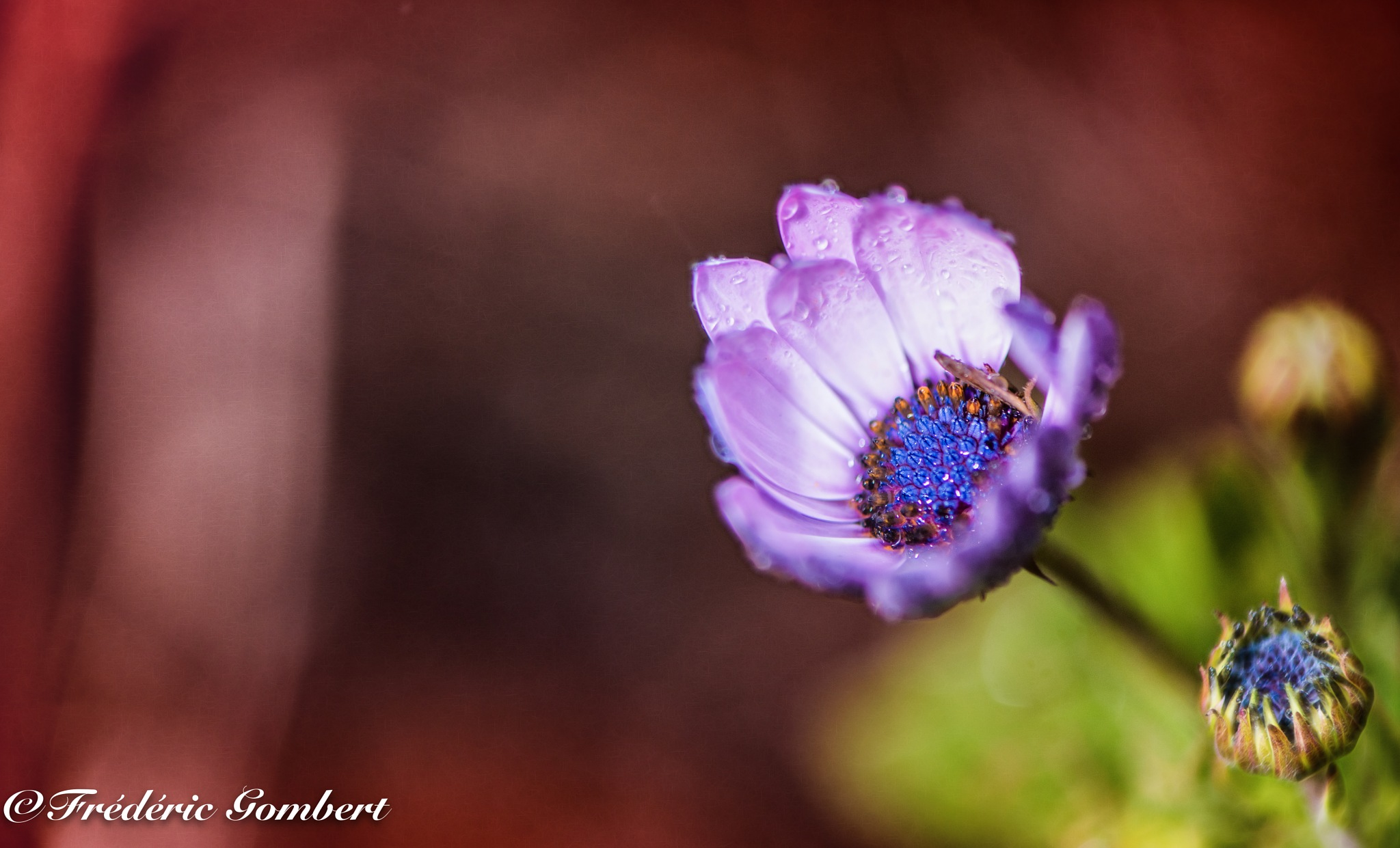 Spring Rain by Frederic Gombert
