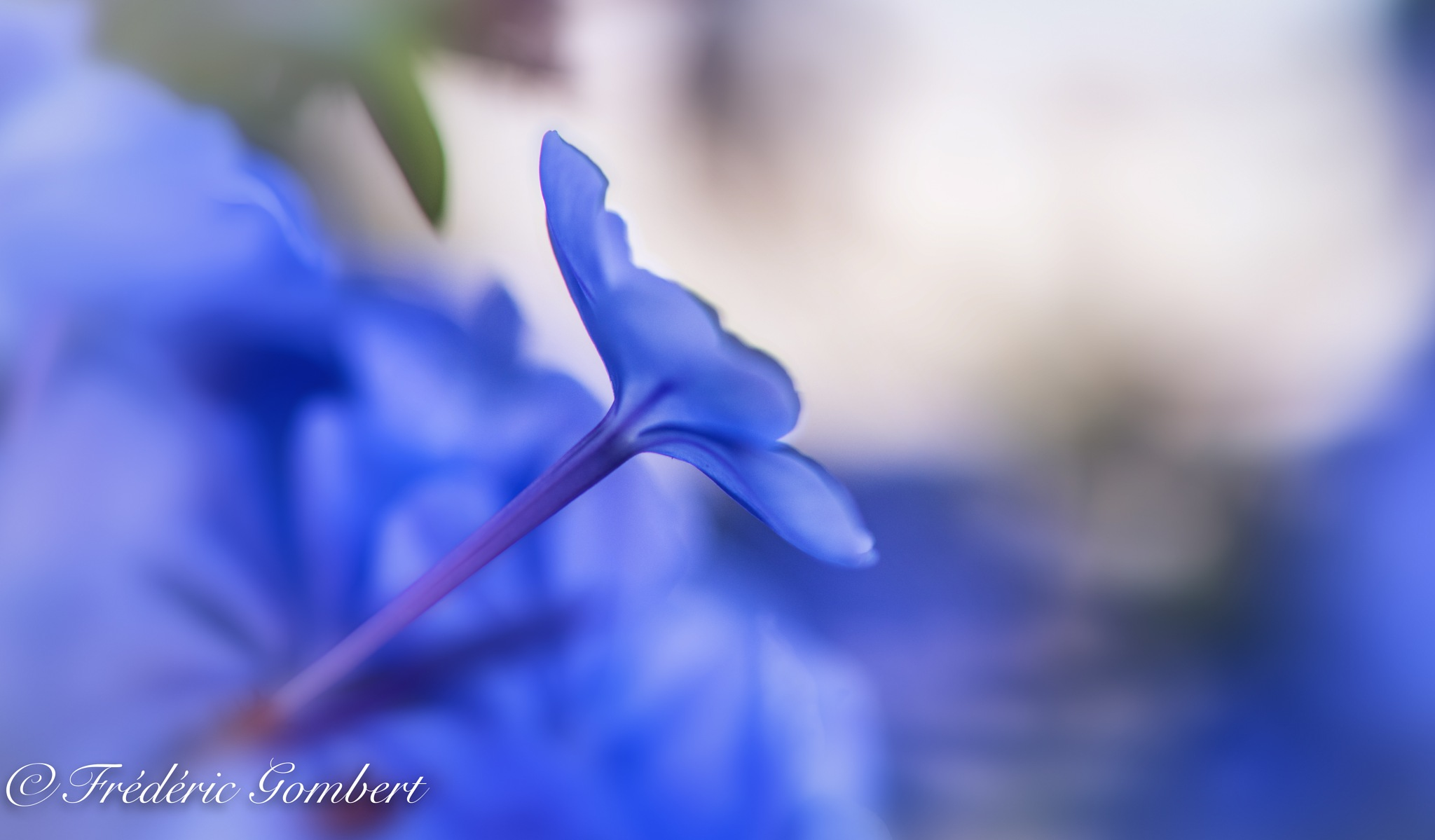 Rising Up by Frederic Gombert
