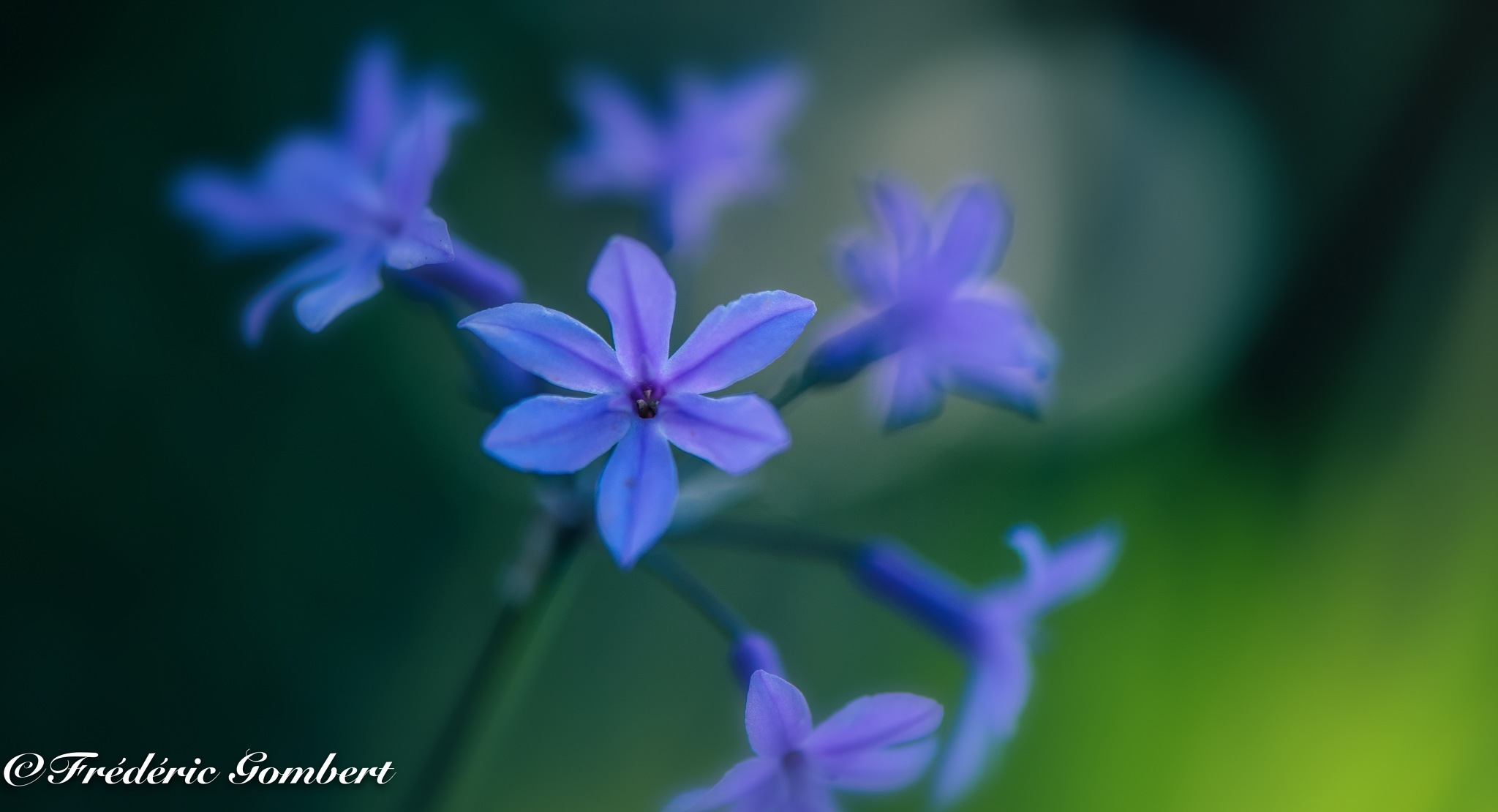blue time by Frederic Gombert