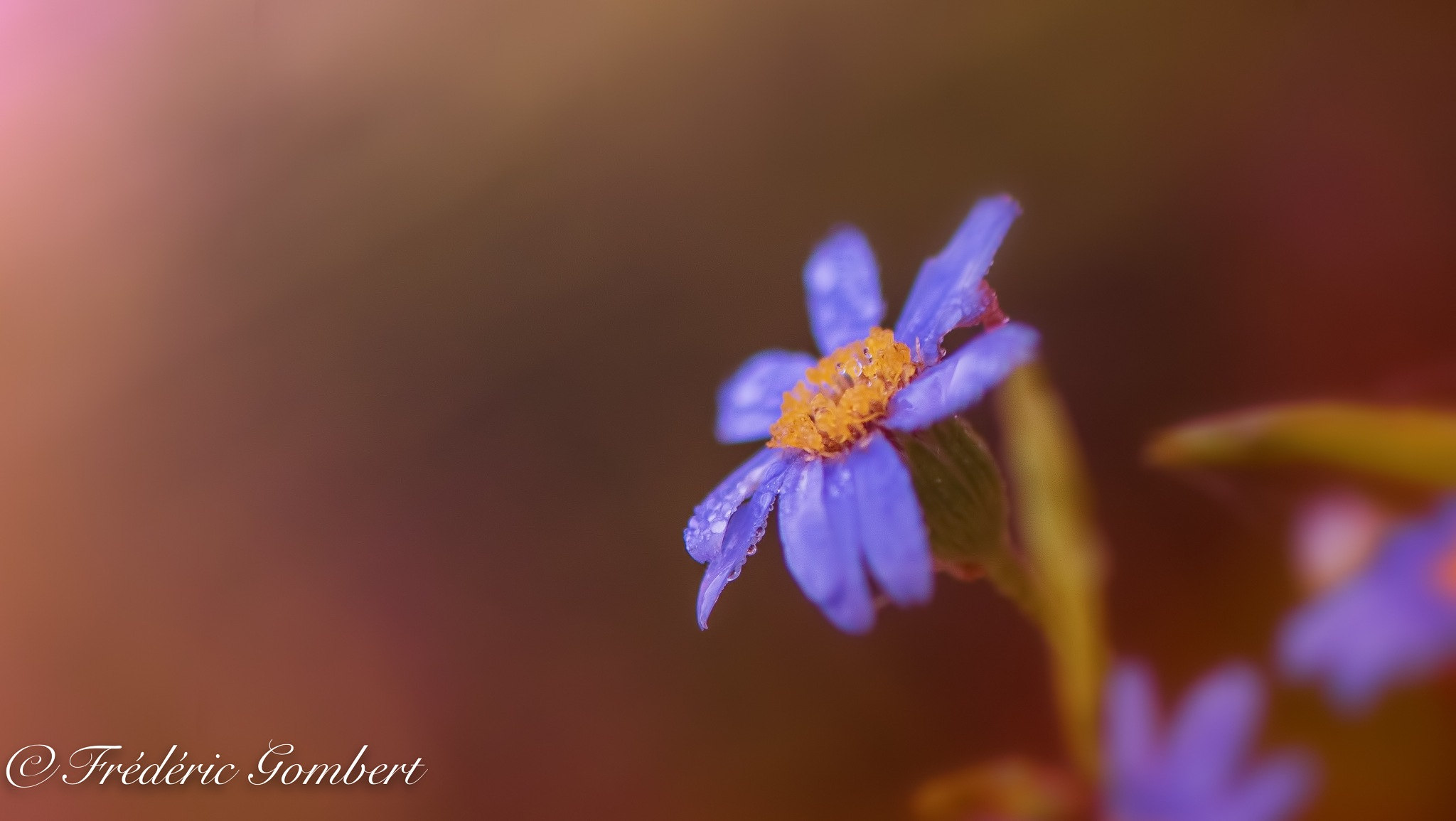 tiny droplets of autumn by Frederic Gombert