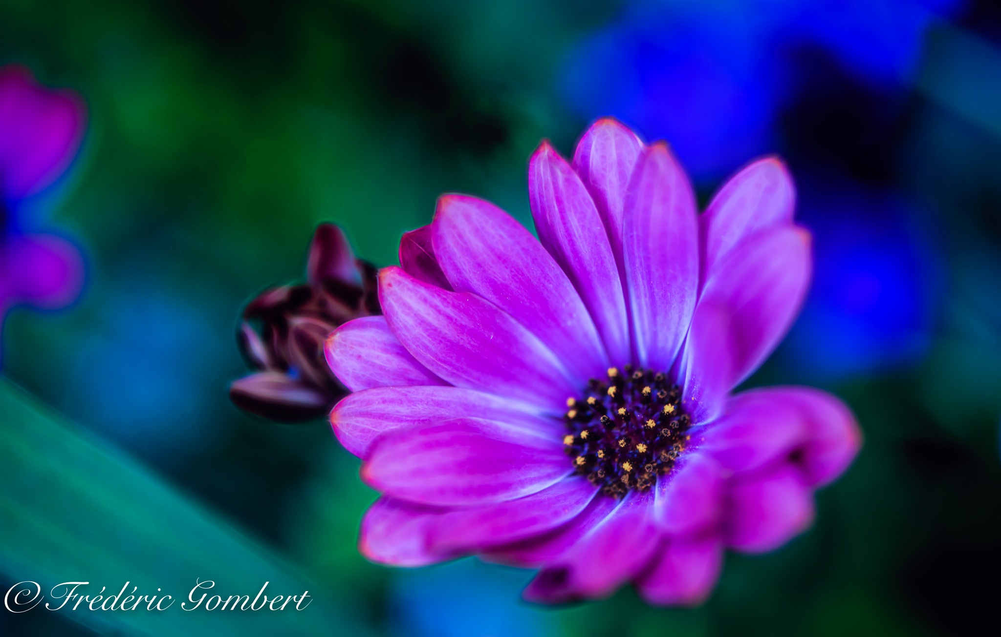 May be Blue by Frederic Gombert