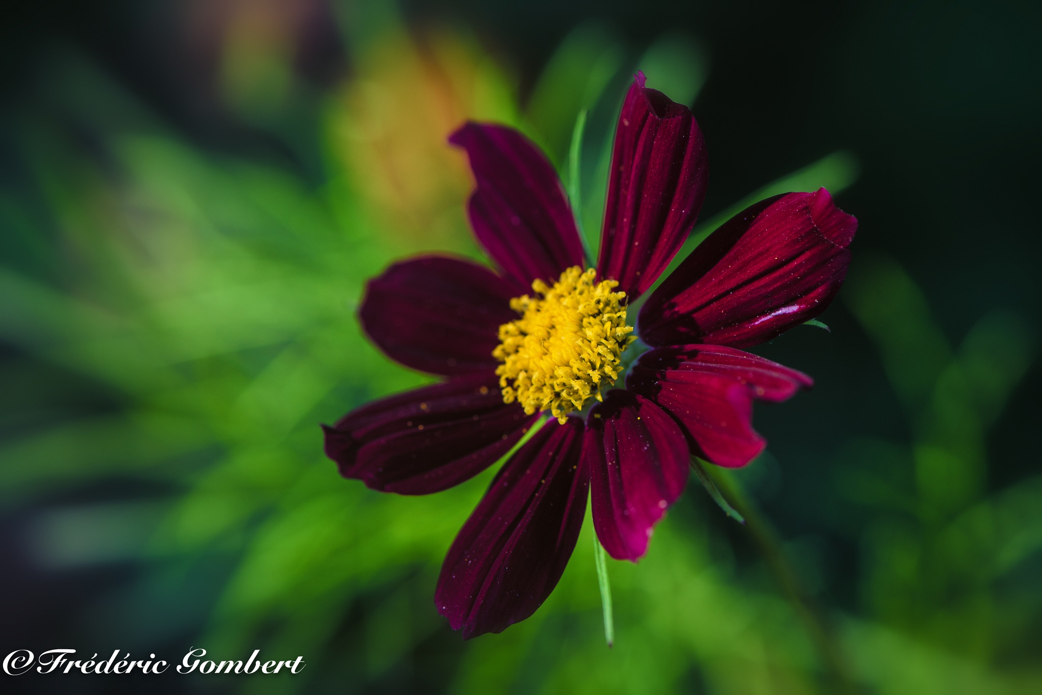 natural morning by Frederic Gombert