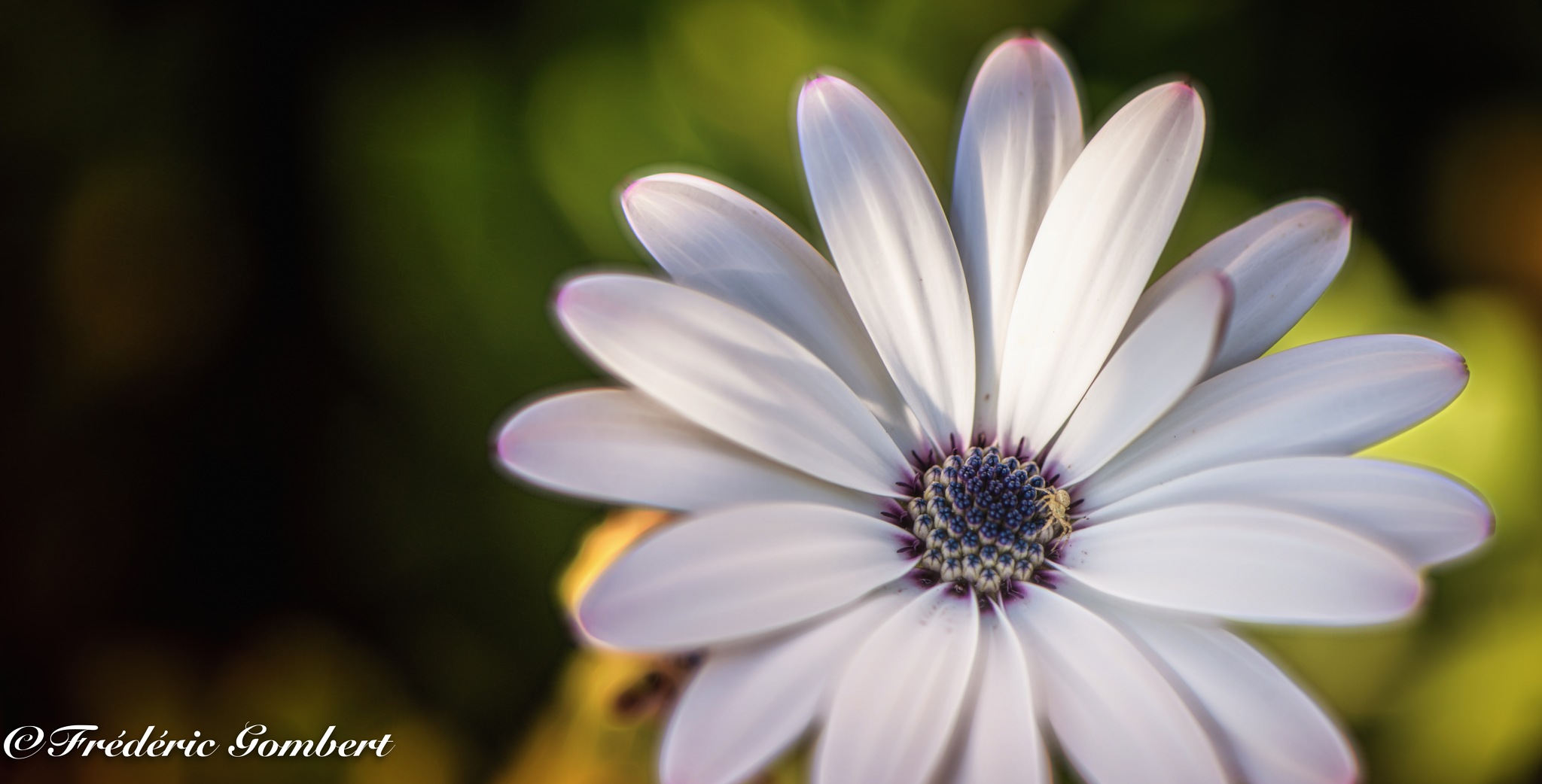 going to the light by Frederic Gombert