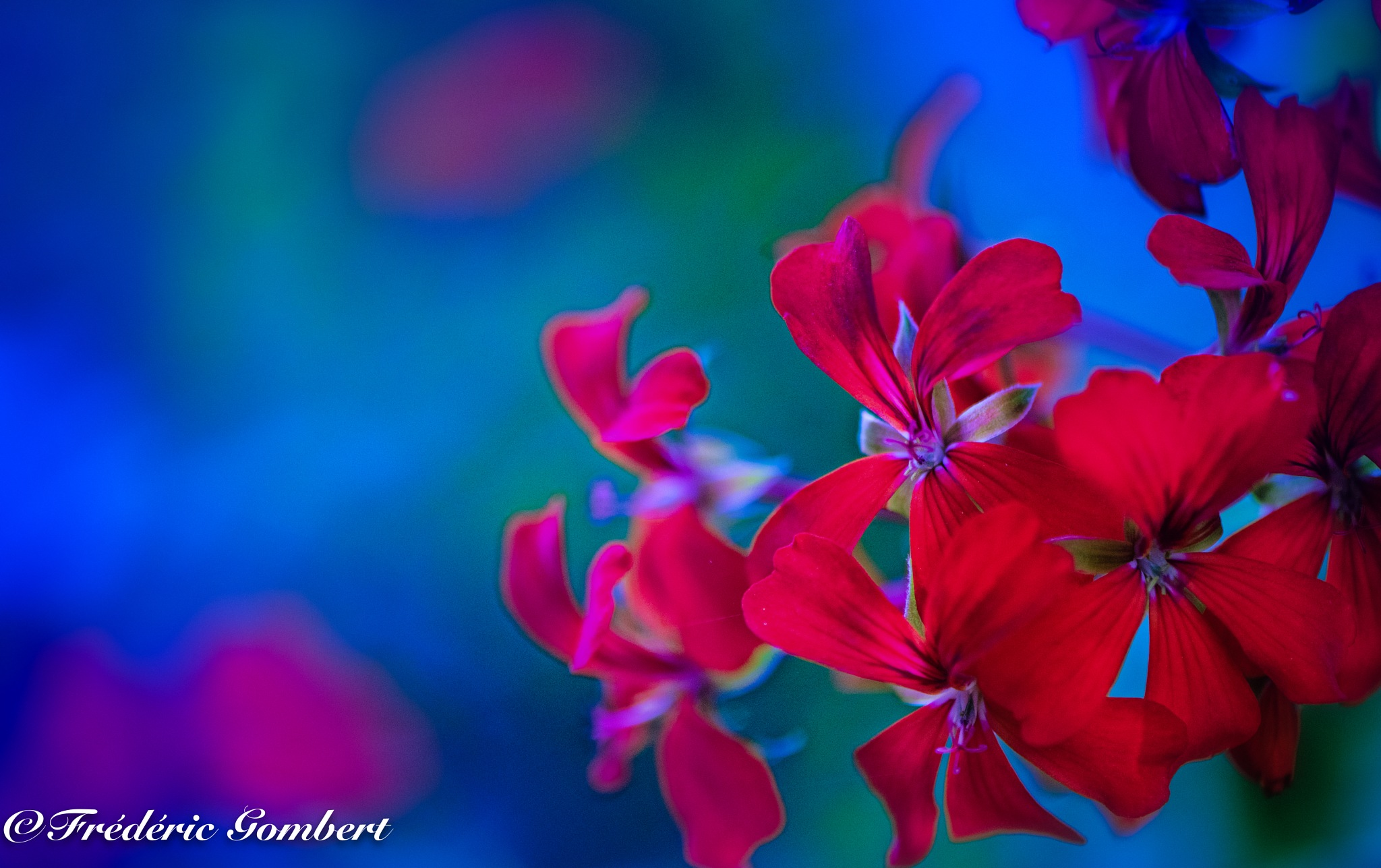 Yet, here by Frederic Gombert