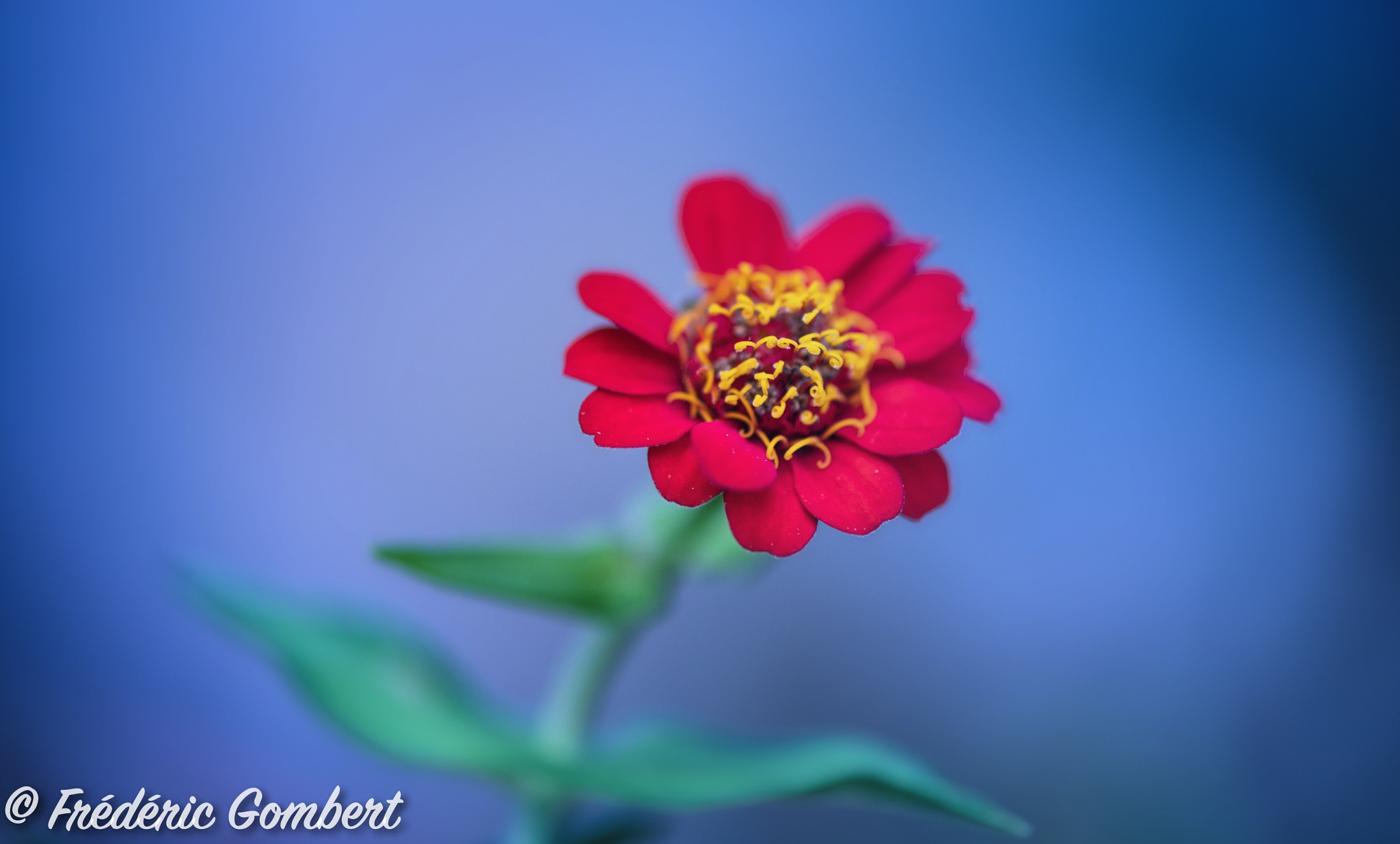 red ... Simply ... by Frederic Gombert