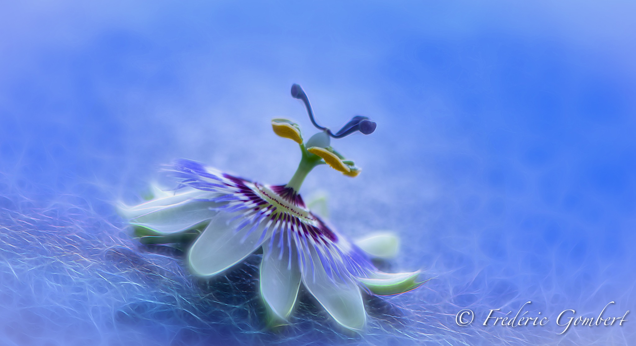 Bottom Up by Frederic Gombert