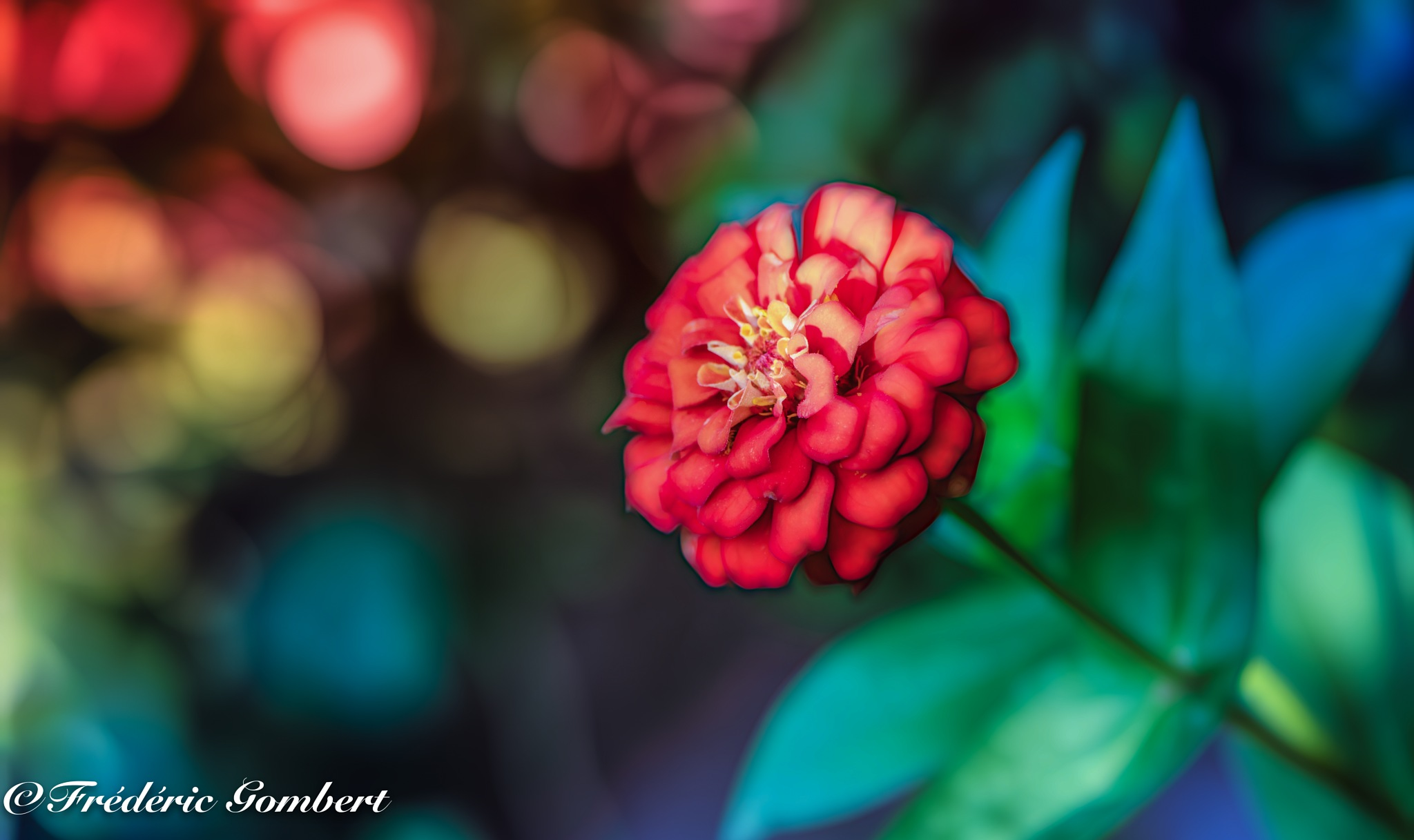a piece of Summer by Frederic Gombert