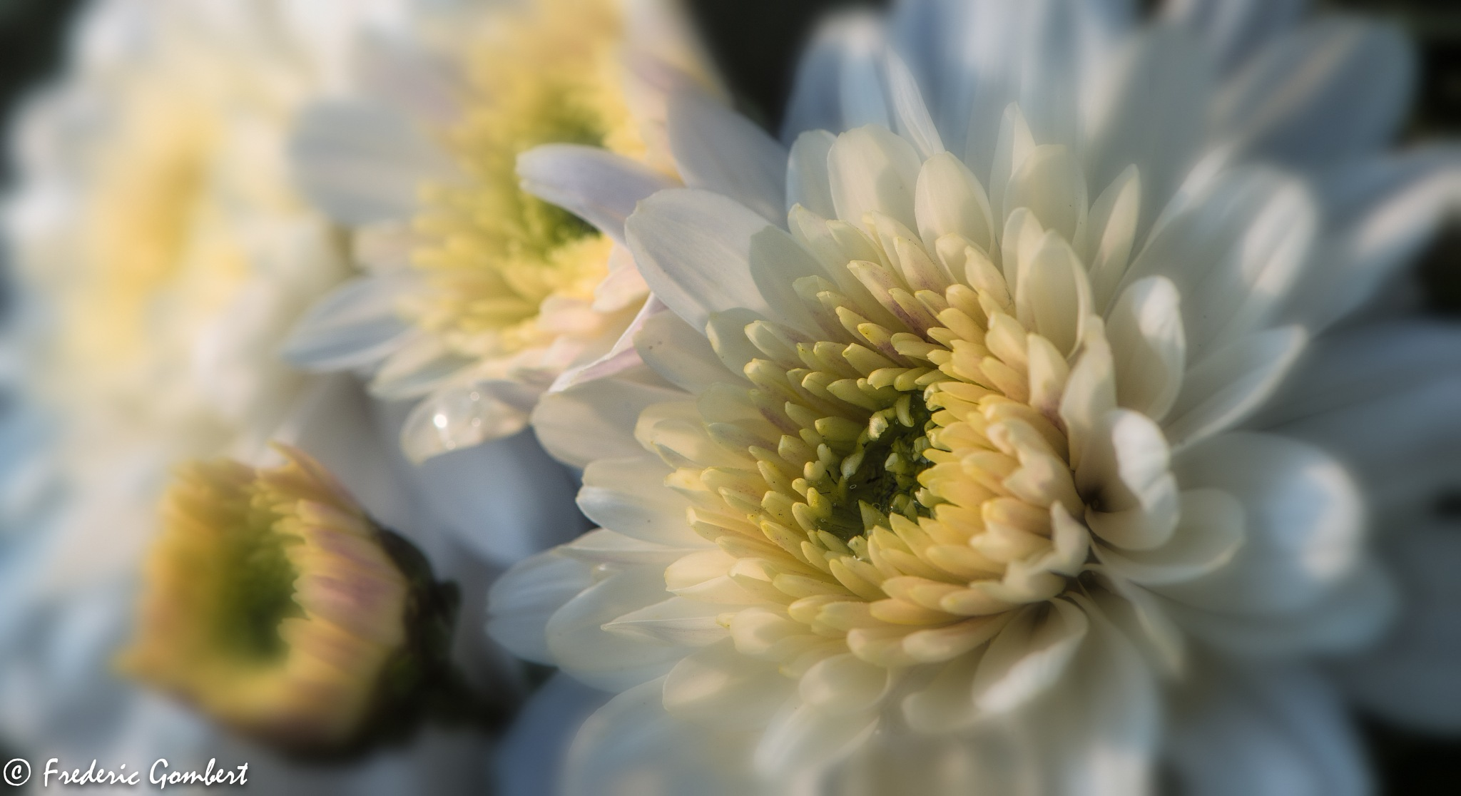Sunlight by Frederic Gombert