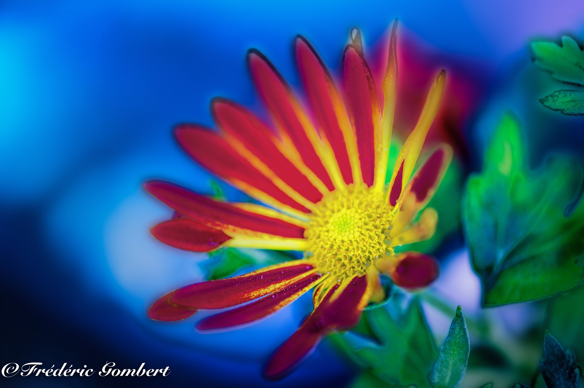 color explosion of Spring by Frederic Gombert