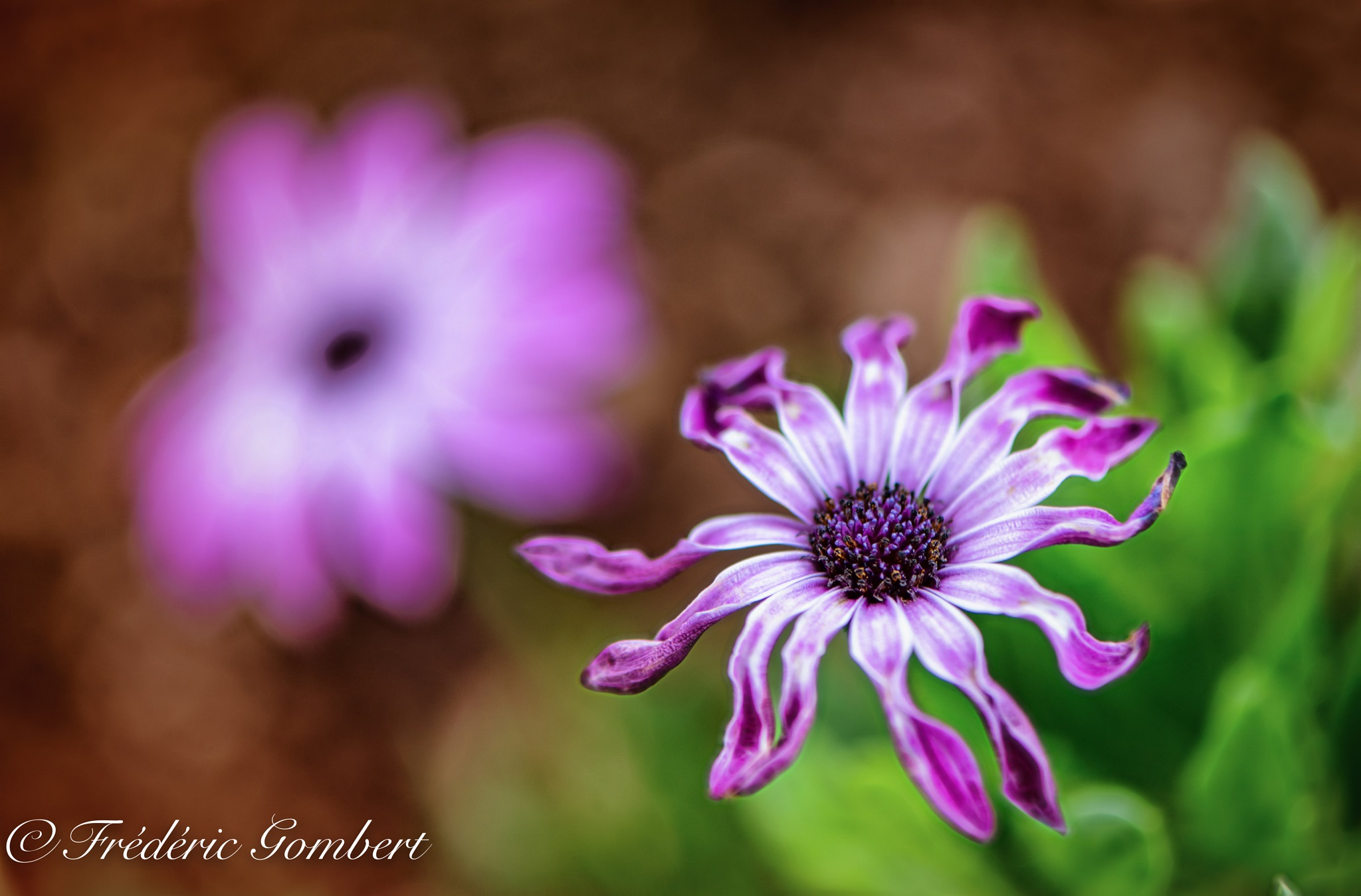 Dancing by Frederic Gombert