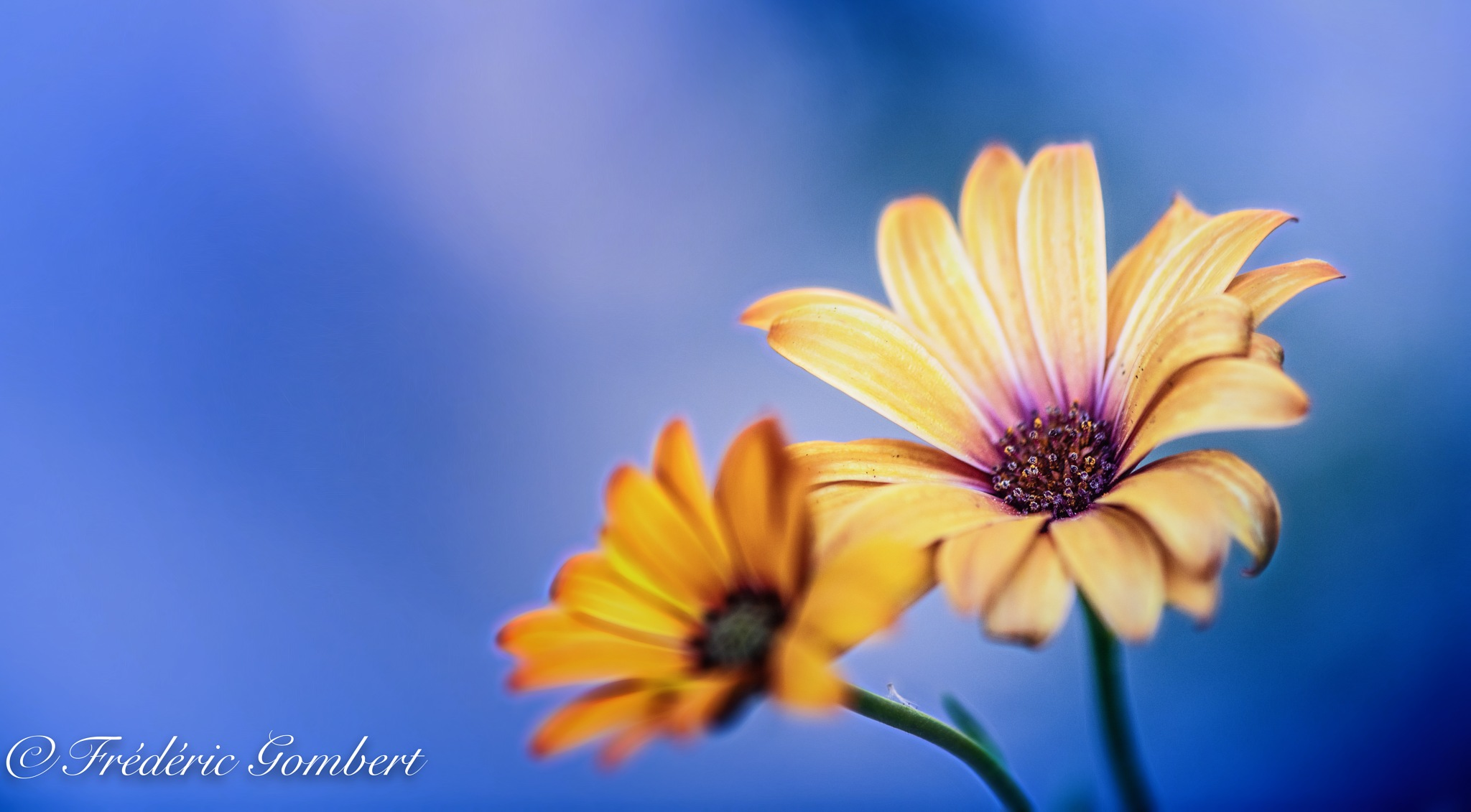 Sisters in Autumn by Frederic Gombert