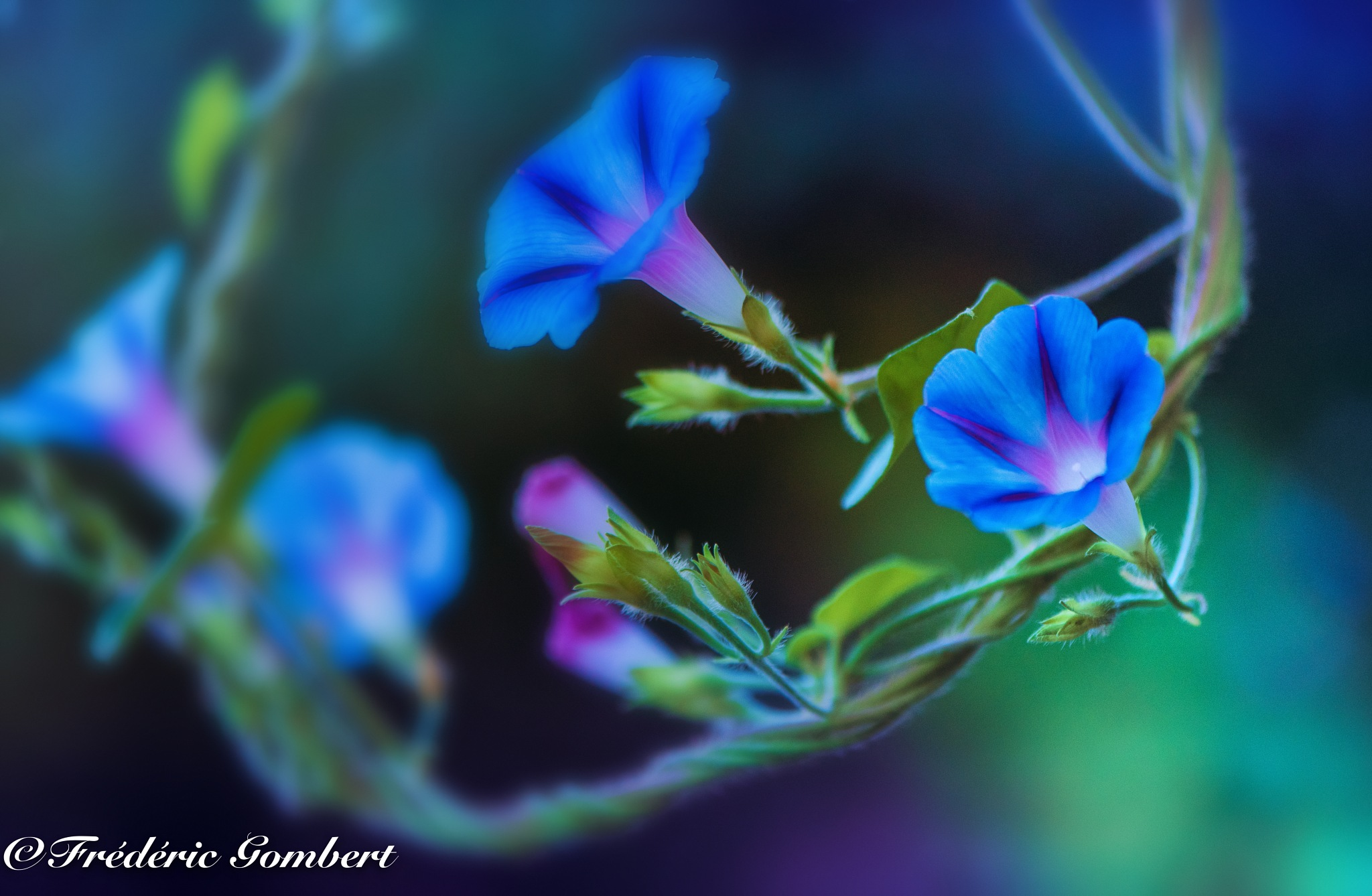Swing life by Frederic Gombert
