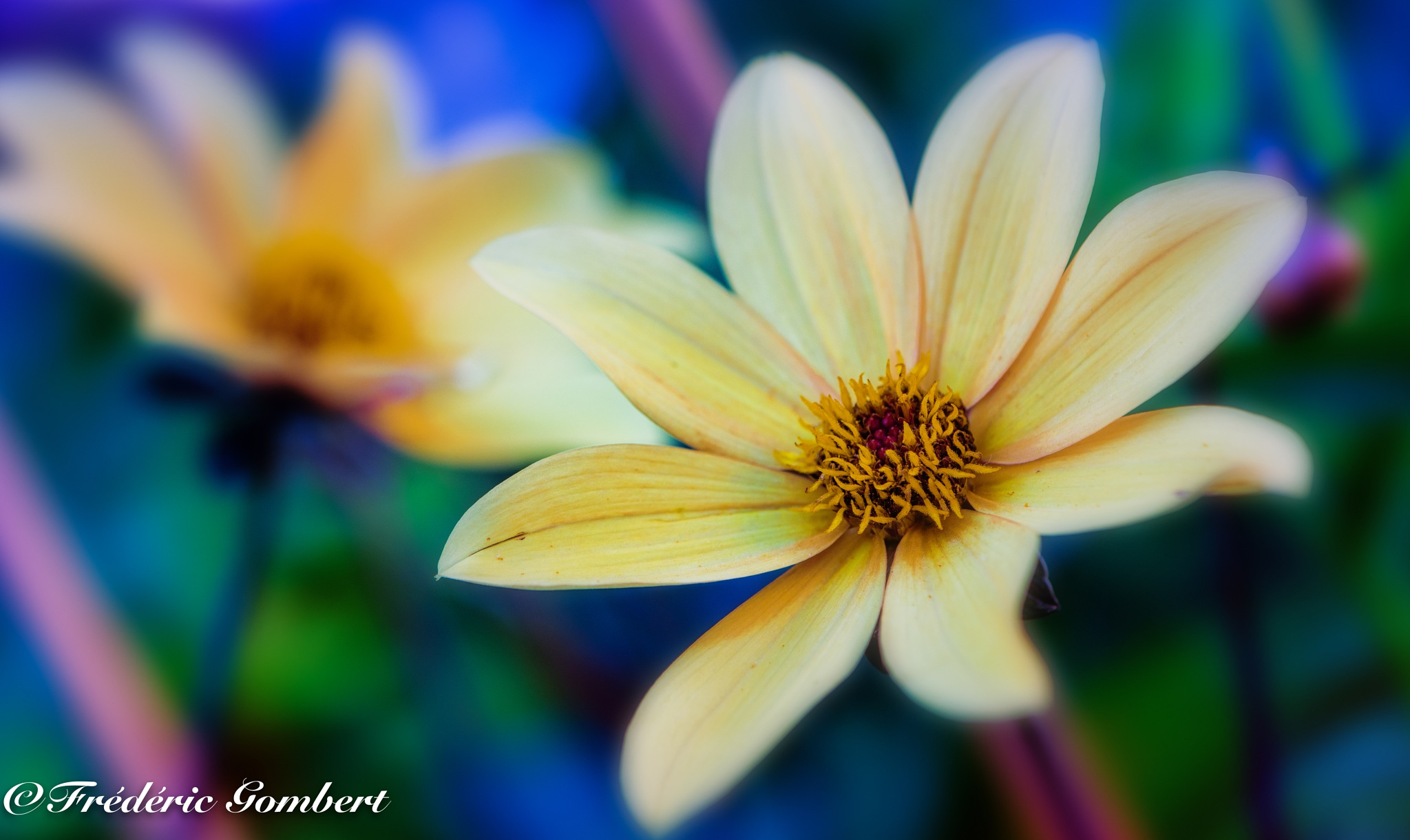 the Summer world by Frederic Gombert