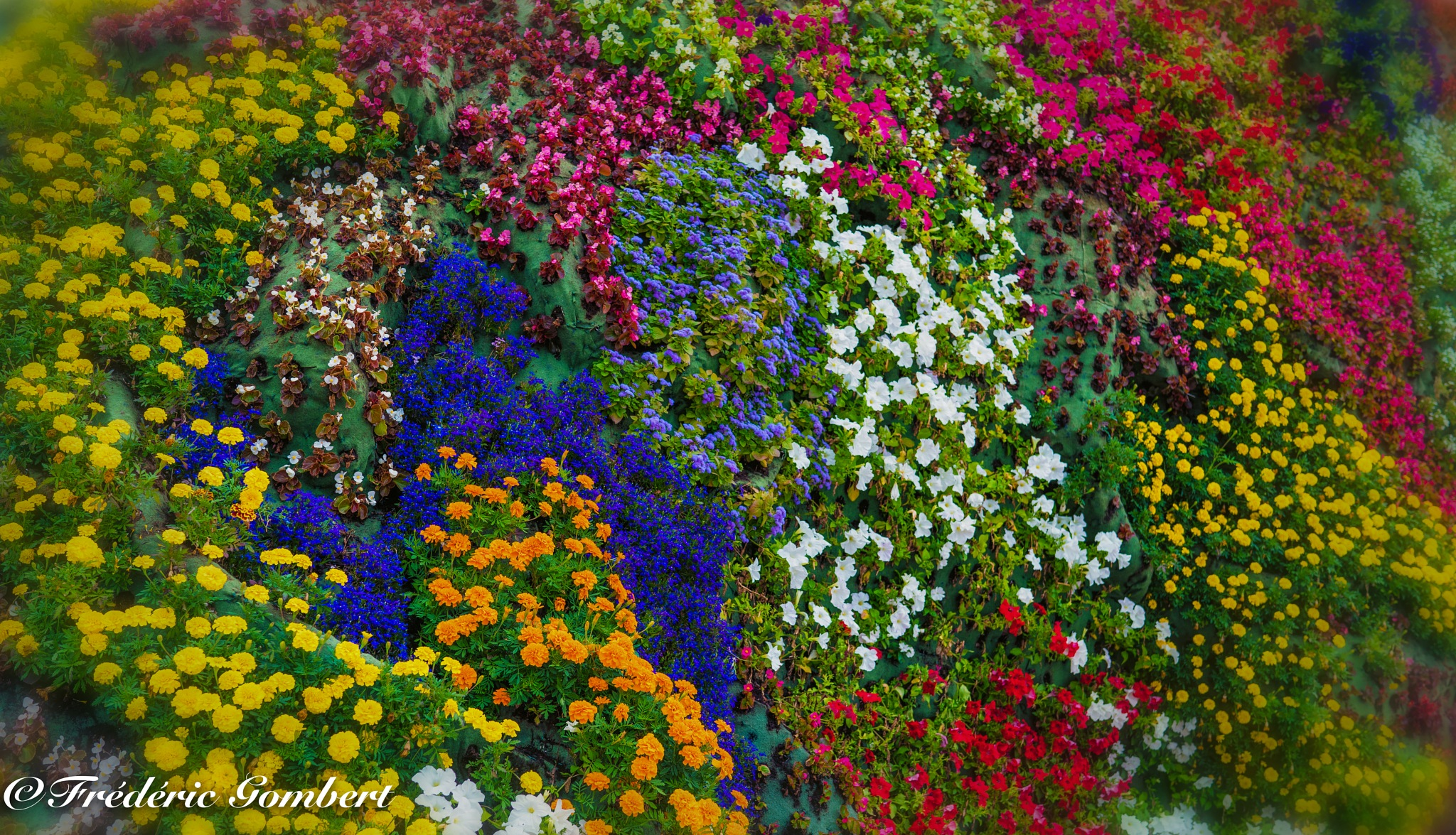 the wall by Frederic Gombert
