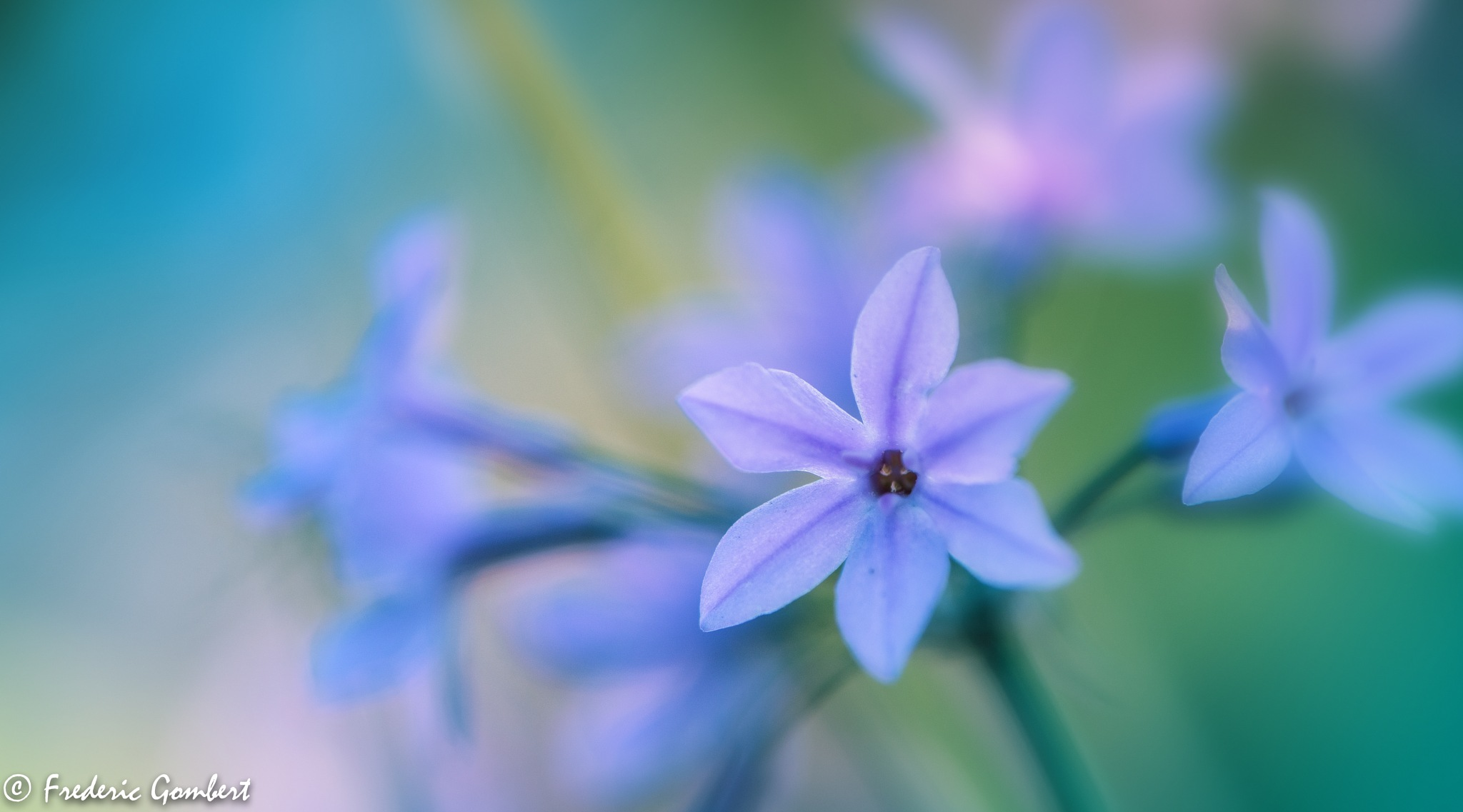 blue light by Frederic Gombert