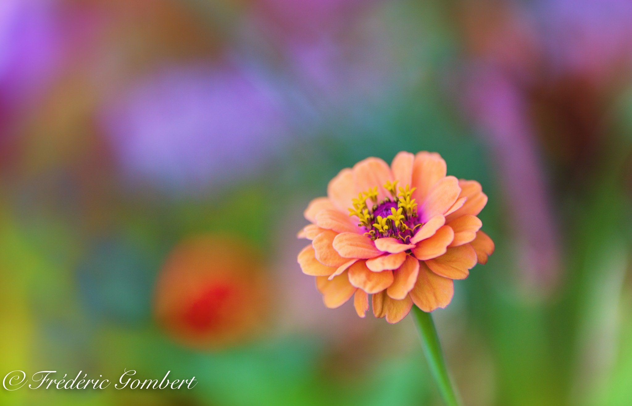 colors of Sun by Frederic Gombert