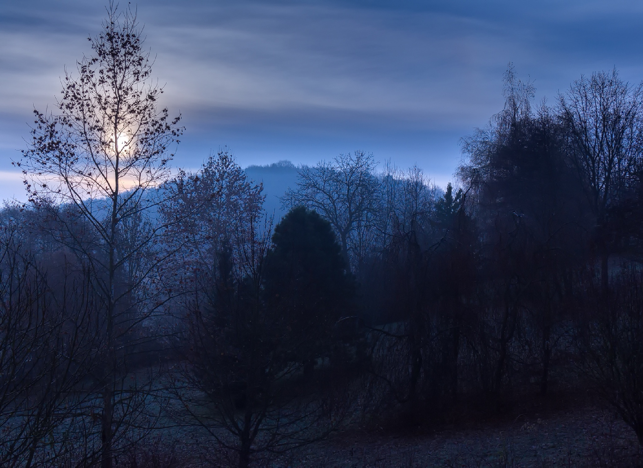 Misty morning by Michael Freitag