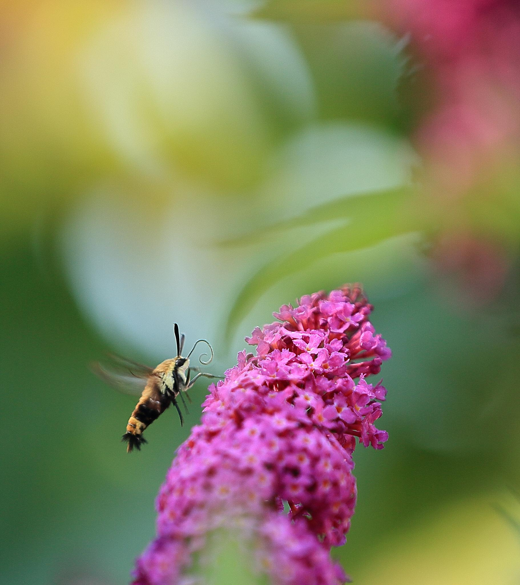 bee by johnniecooney