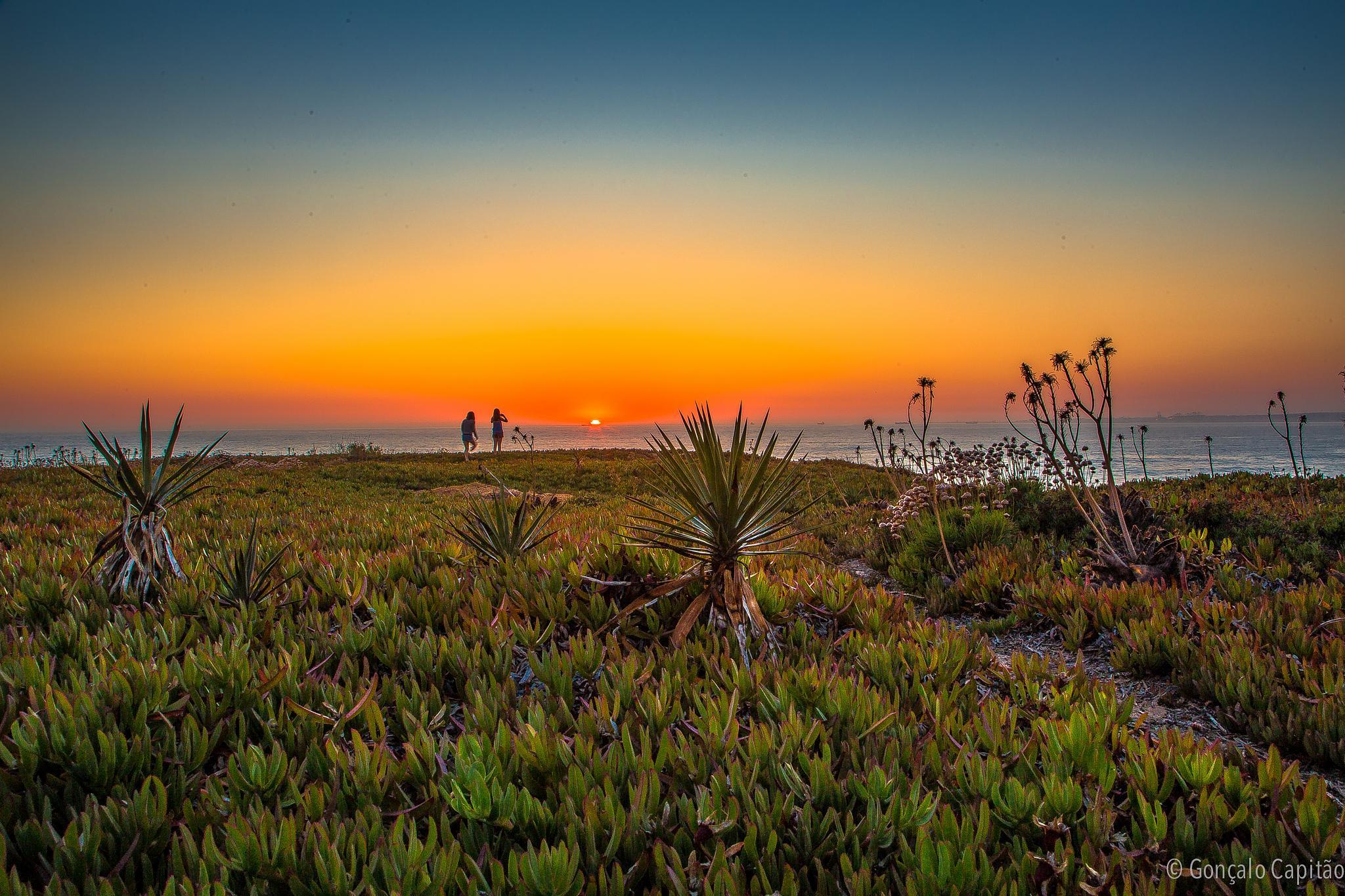 Photo in Landscape #portugal #sunset #sudoeste alentejano #porto covo