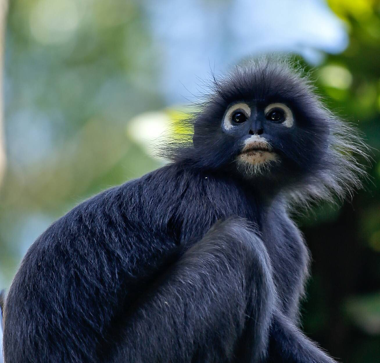 Monkeybusiness by Ruudjieboy