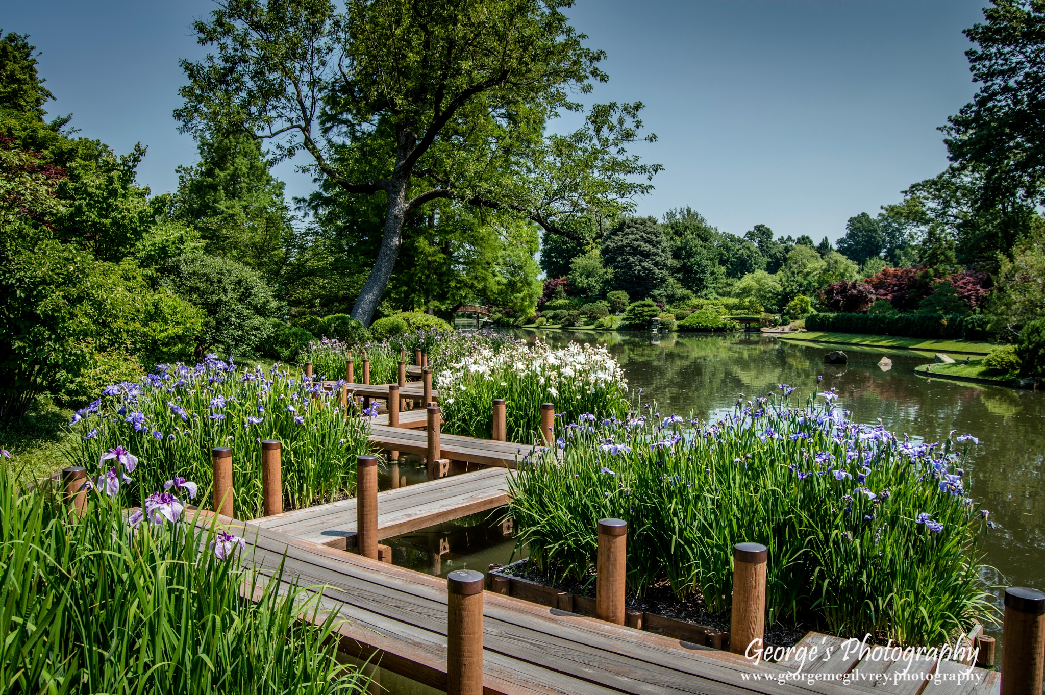 A Walk In The Garden by George McGilvrey