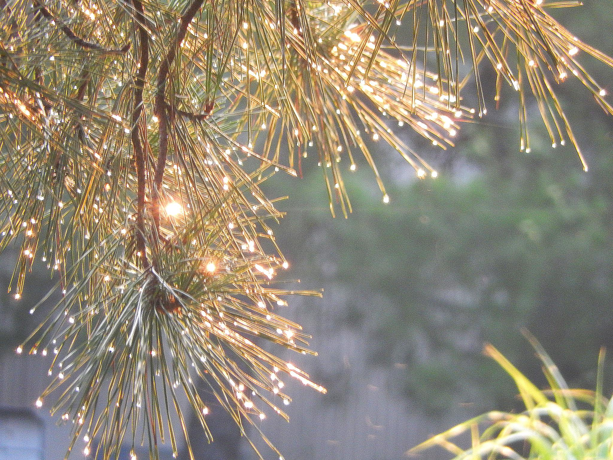 Photo in Landscape #cause and effect #pine #tree