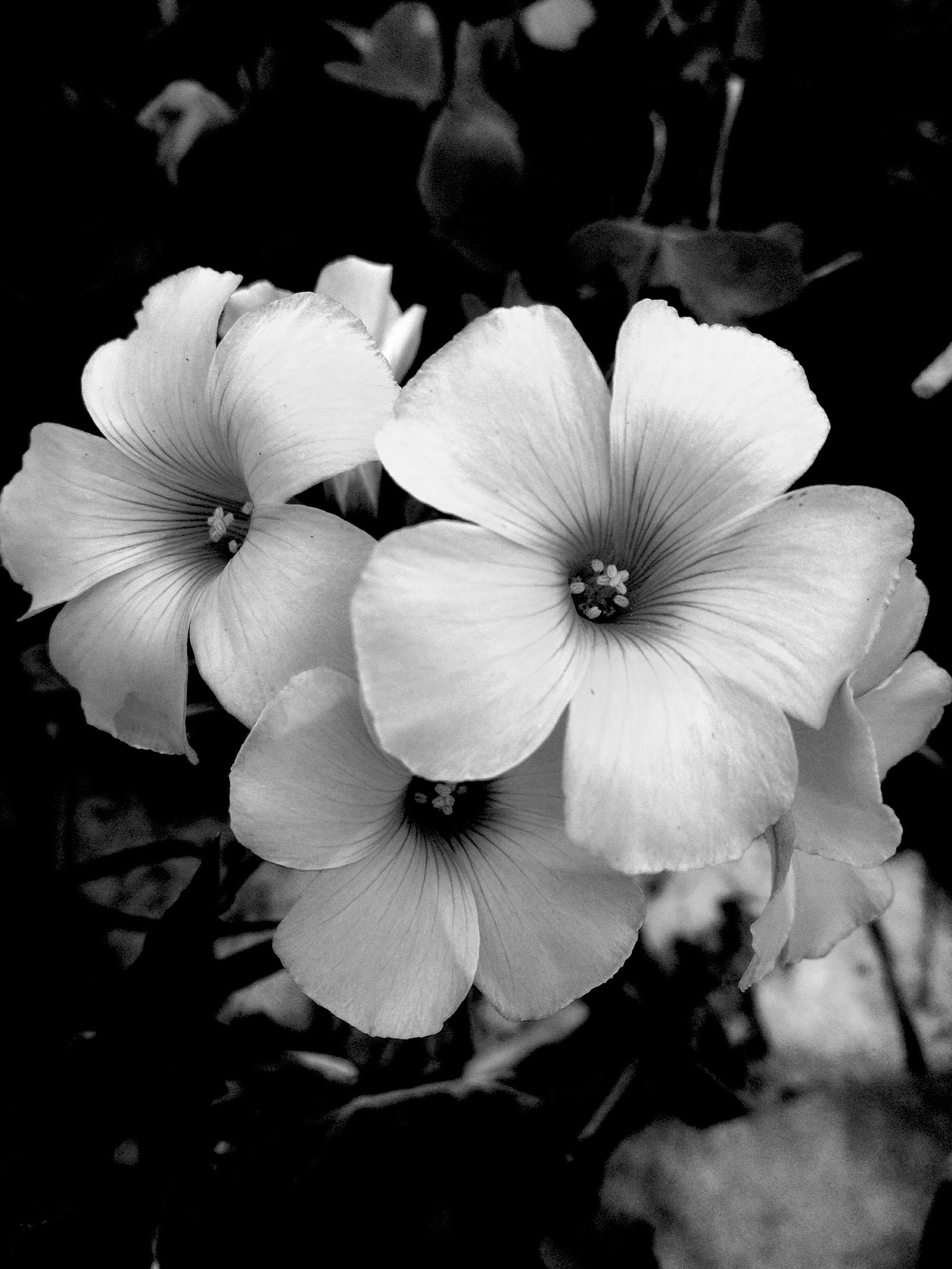 Flowers in monochrome  by Rui Nogueira