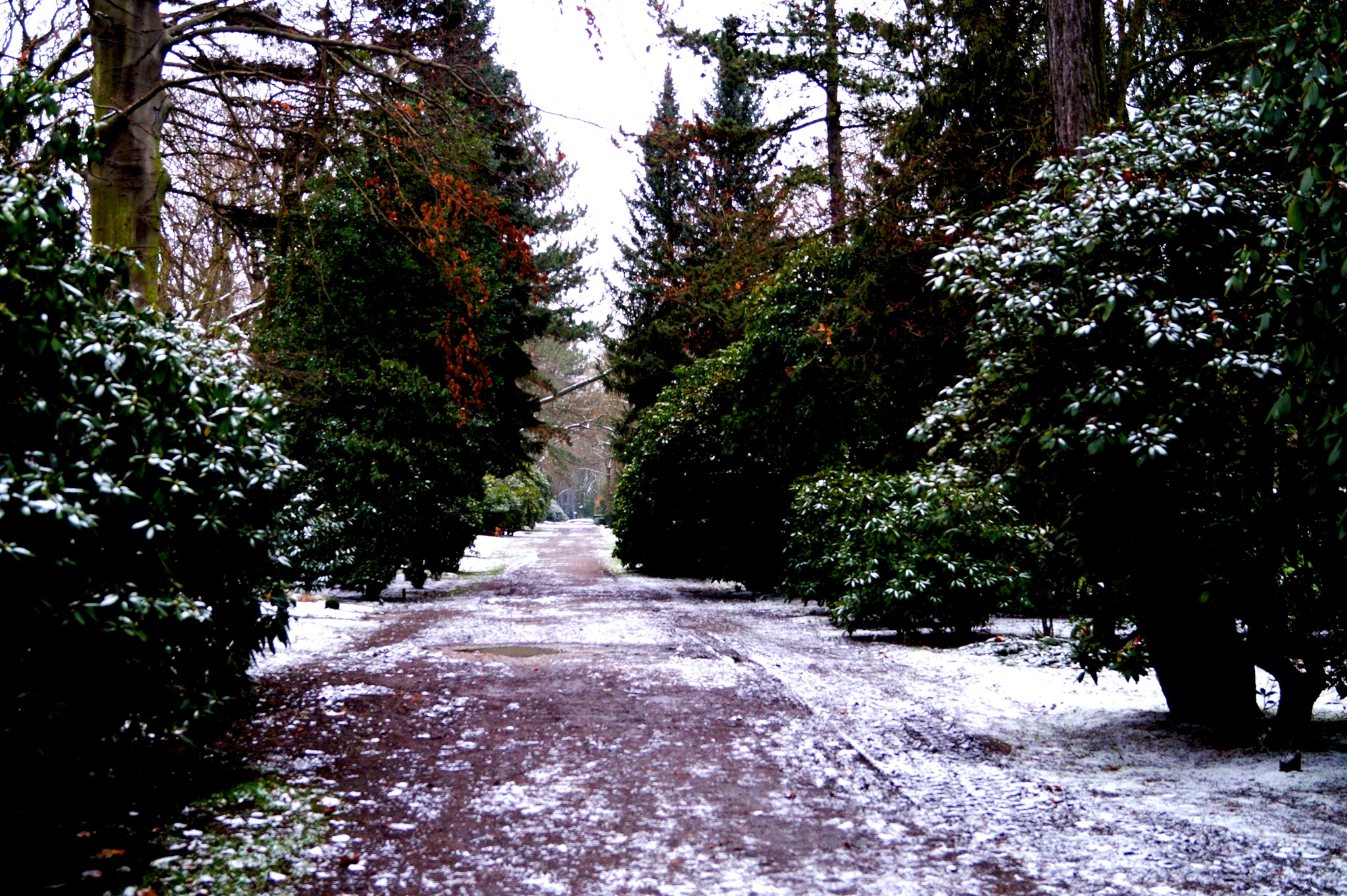 Cold cemetery path by Walter W. Price