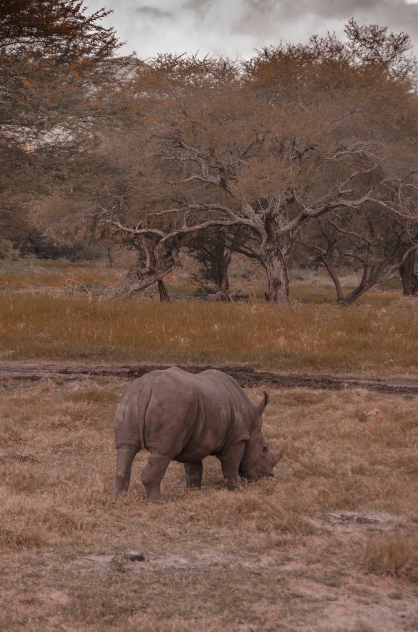 Rhino by andinegerard