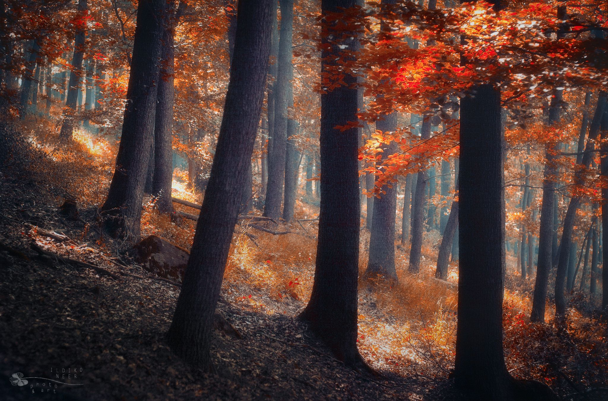 Mystic Forest by Ildiko Neer