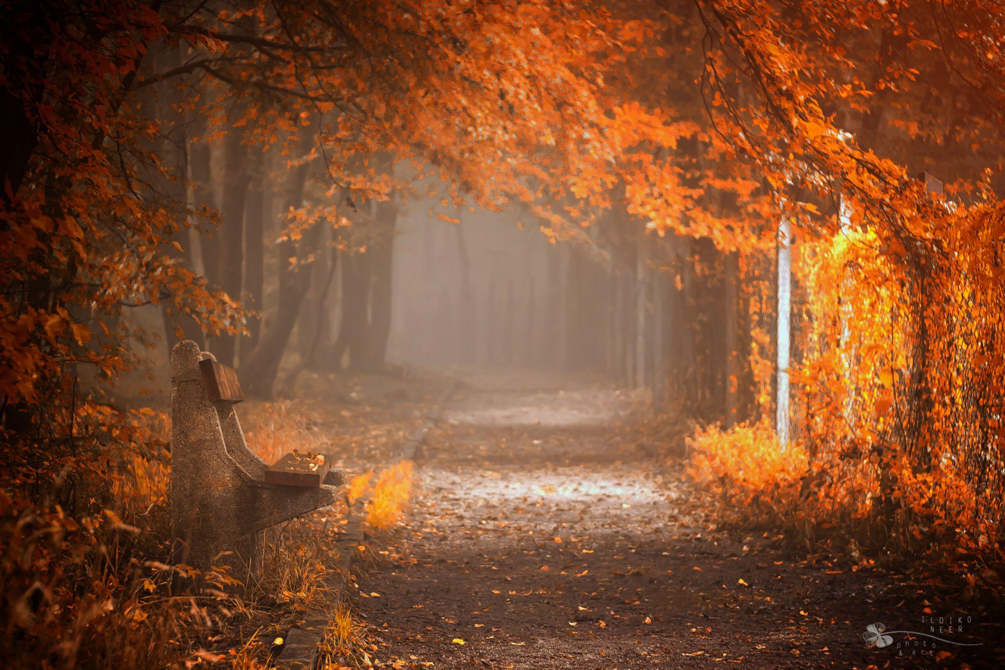 Waiting to Fall by Ildiko Neer