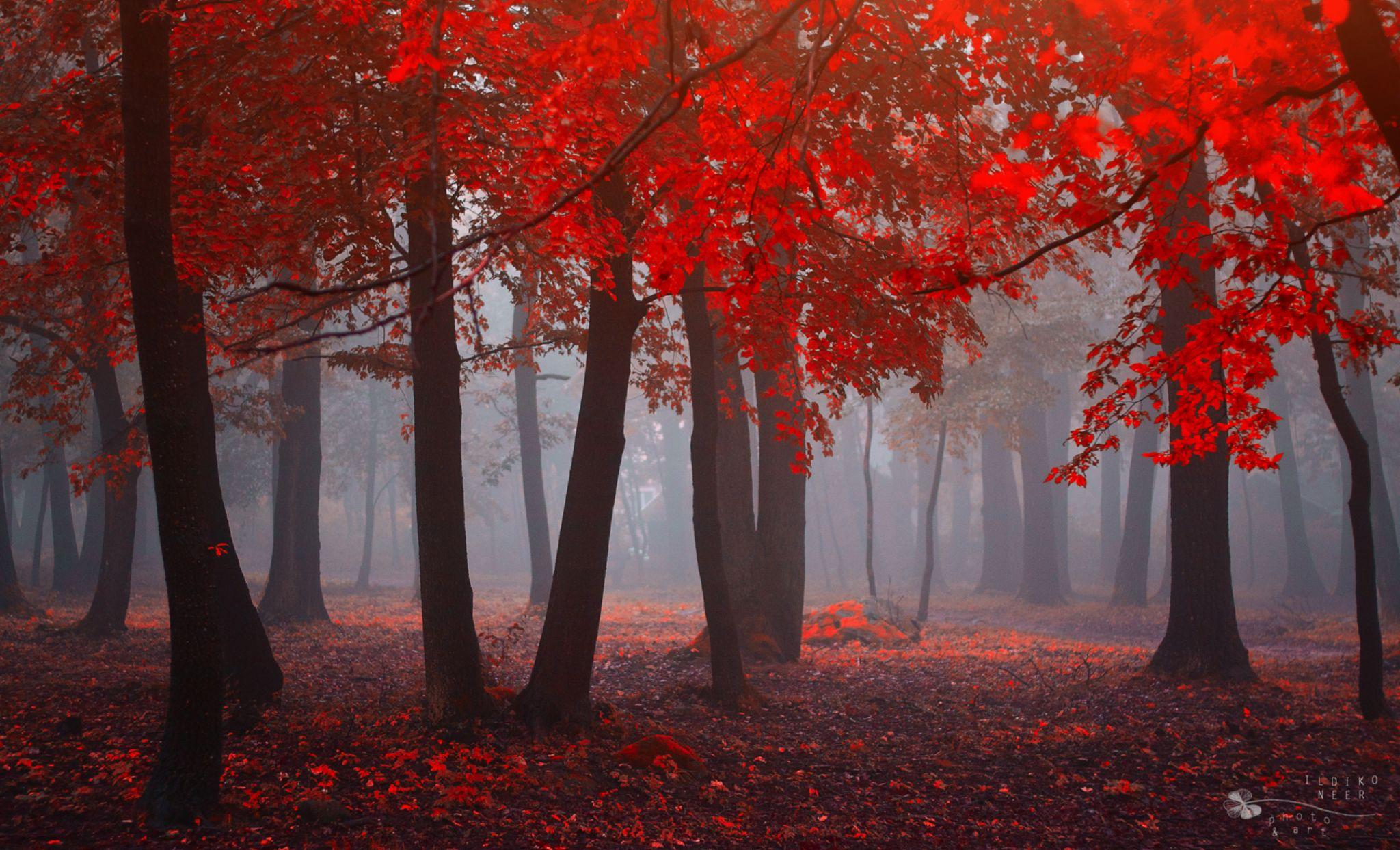 Fire Time by Ildiko Neer