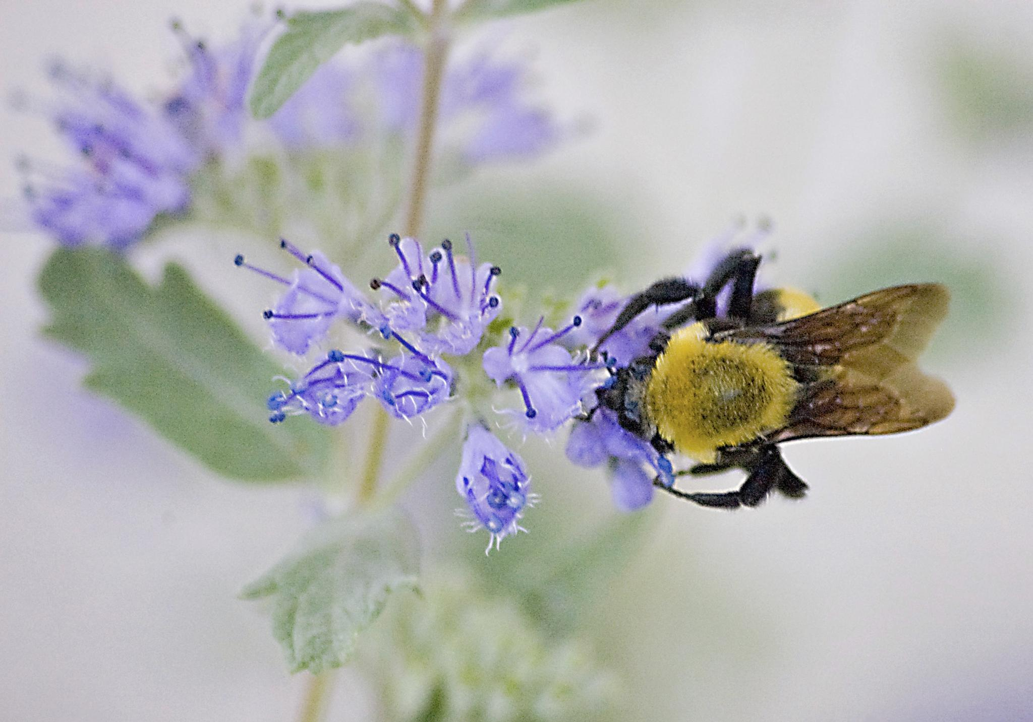 Photo in Animal #insects #bees #nature