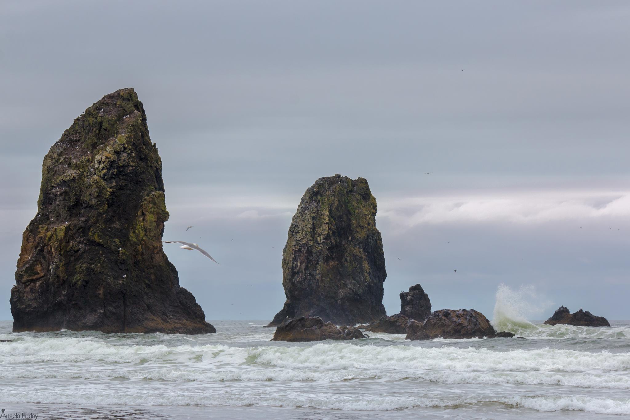 Oregon Beach by Angela Friday