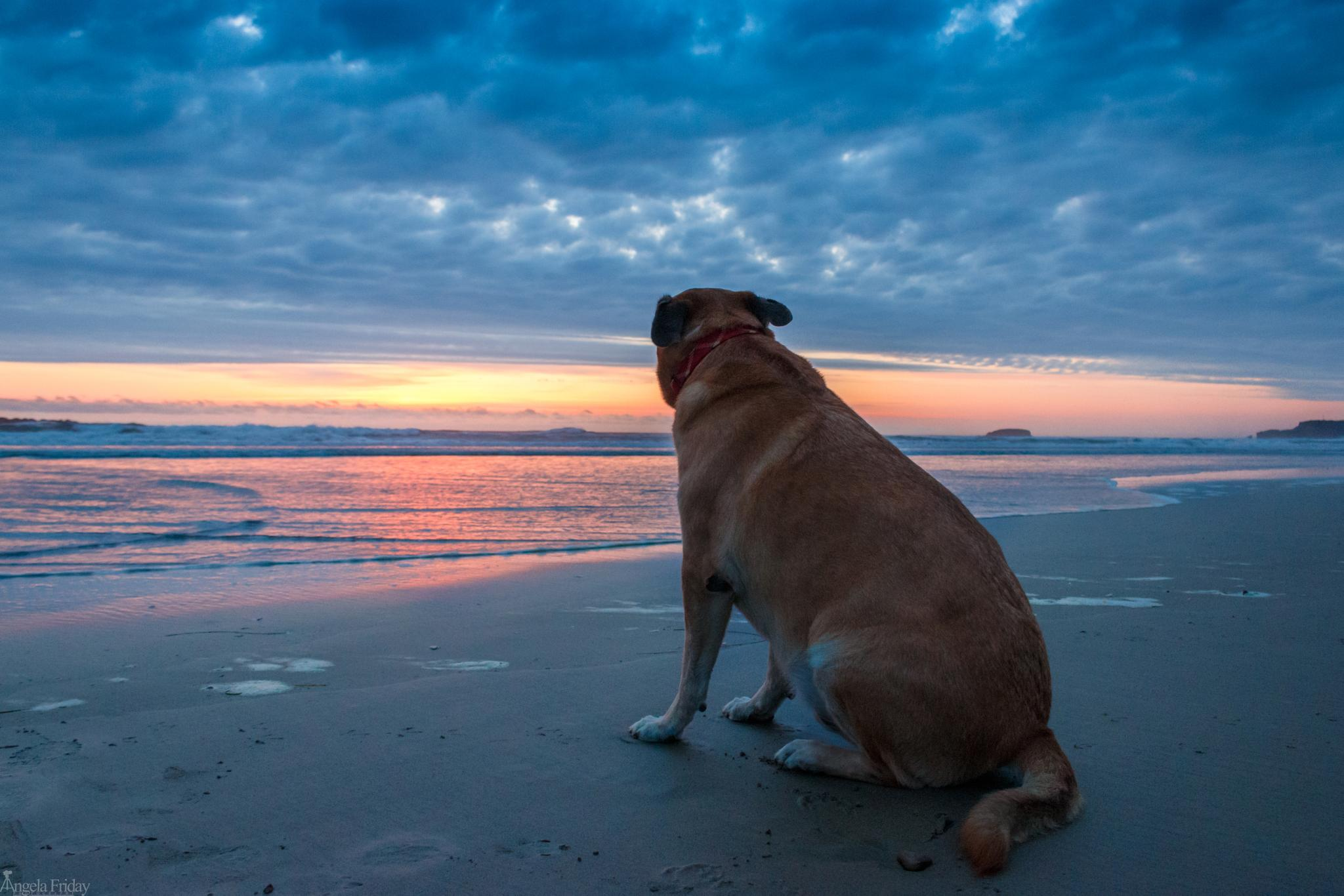 Photo in Landscape #sunset #dog #animal #beach #ocean #sand #vacation #calm #water #coast #oregon #camping #cute
