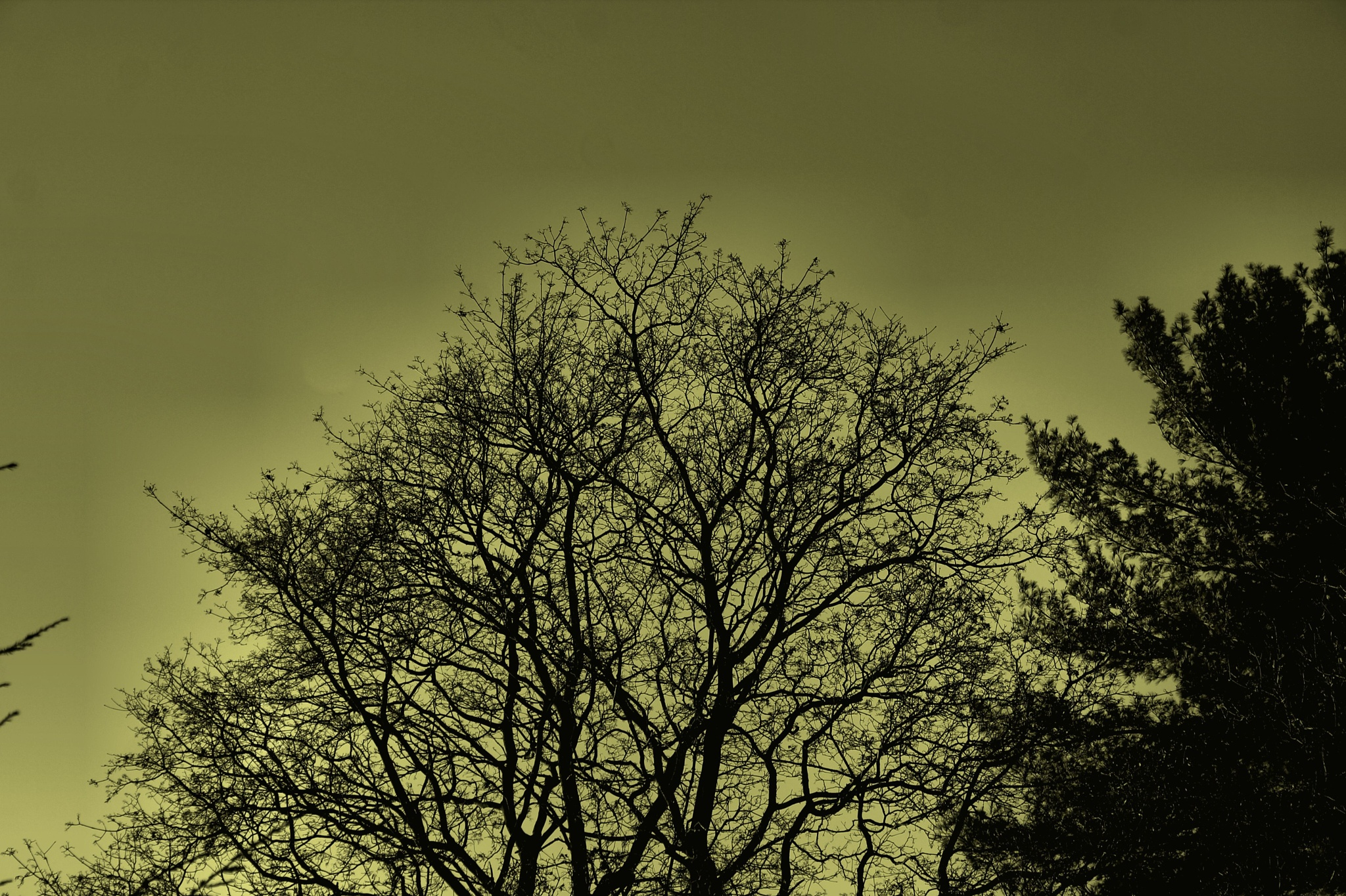 Eerie Night  by dpaul49
