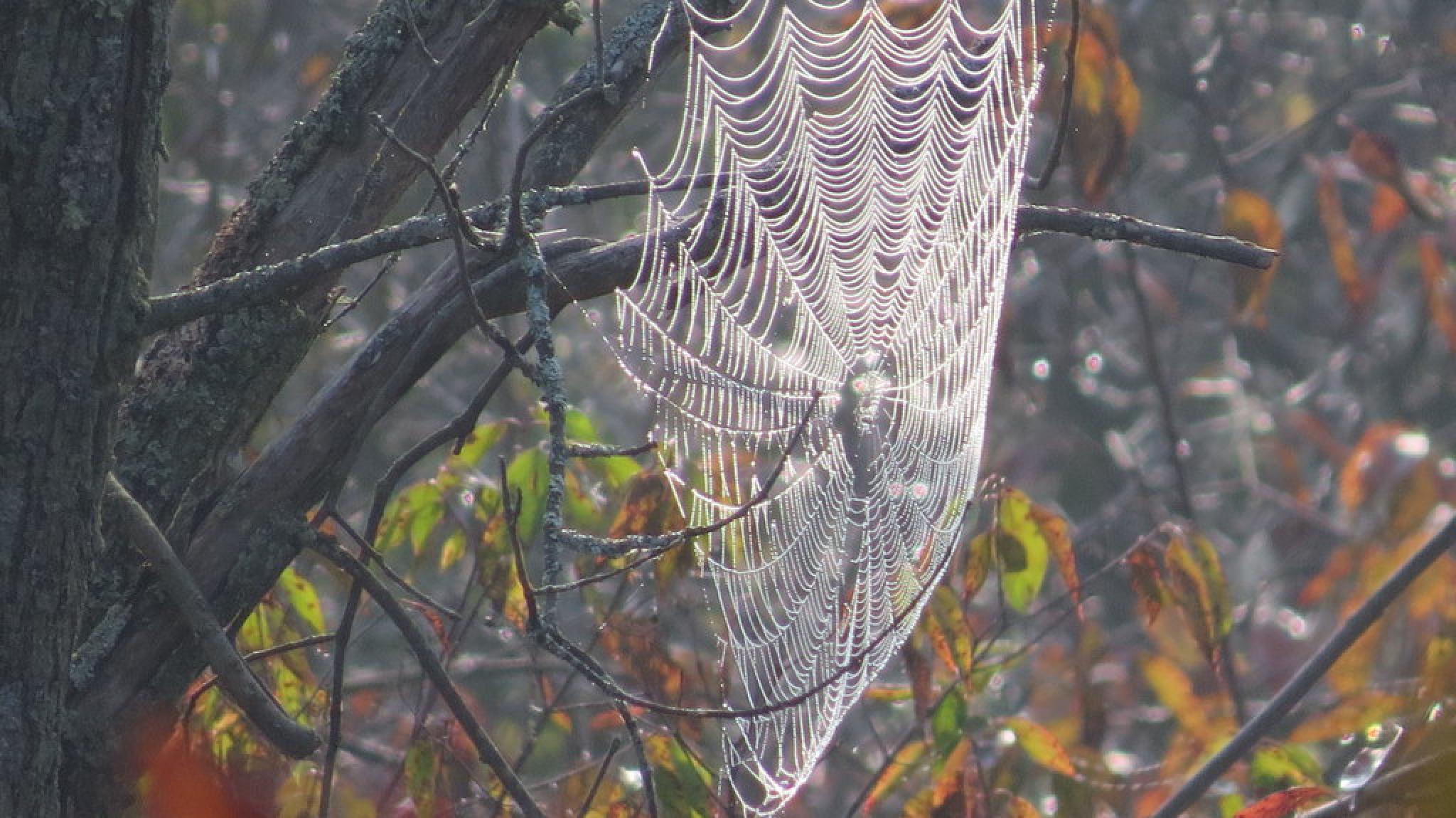 Photo in Random #spiders web #fall #nature