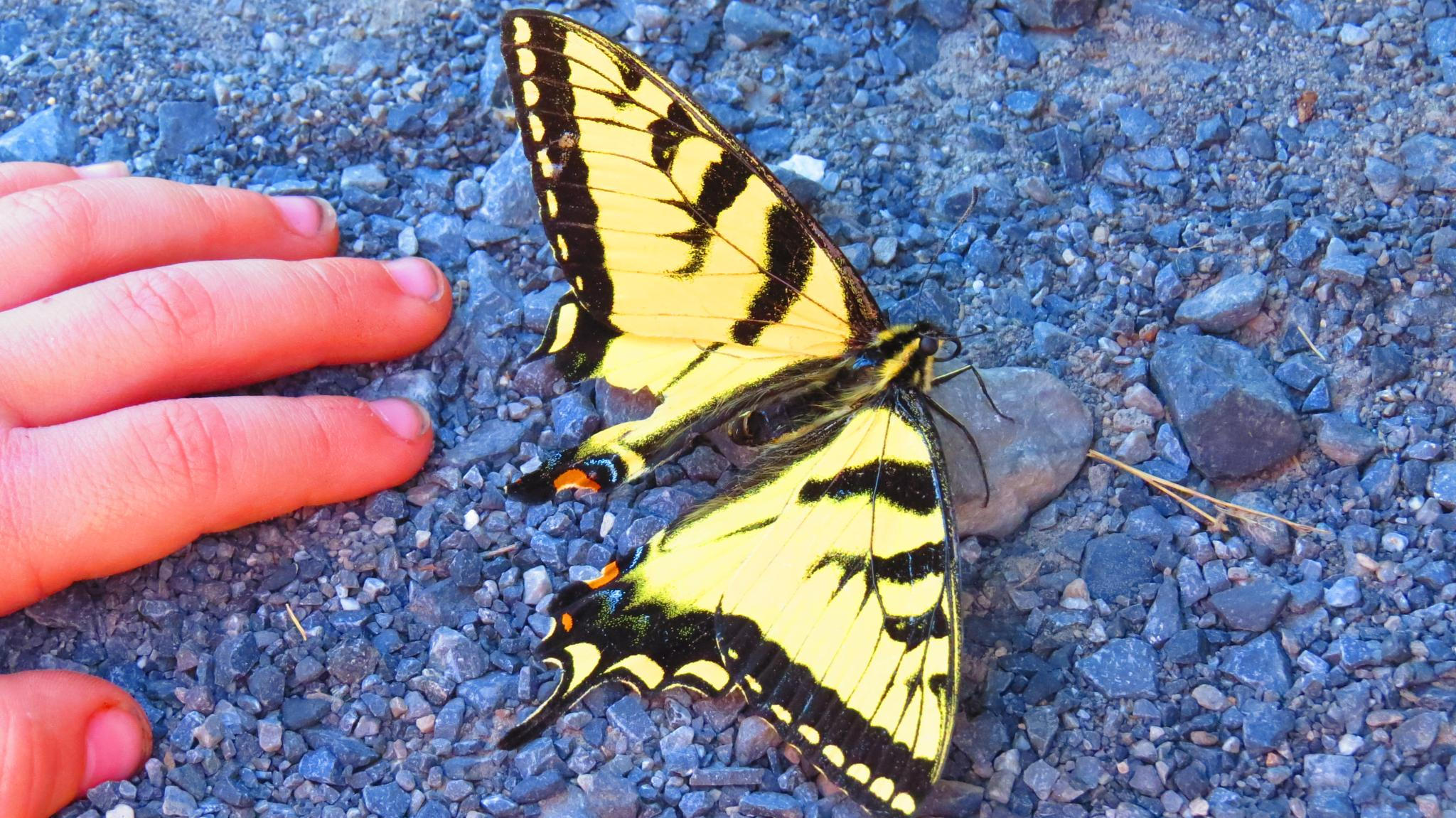 Butterly and a boy by Becky Krug