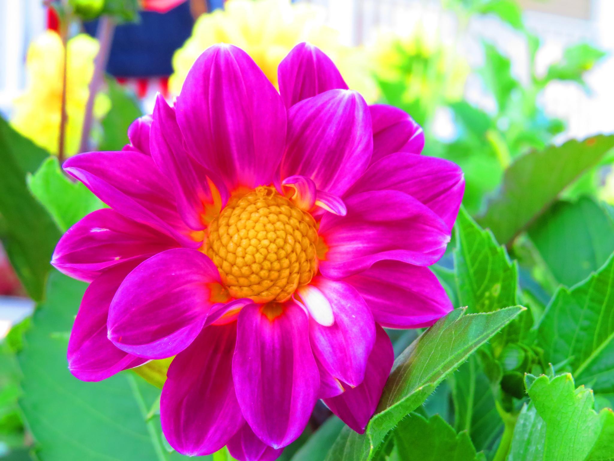 Flower by Becky Krug