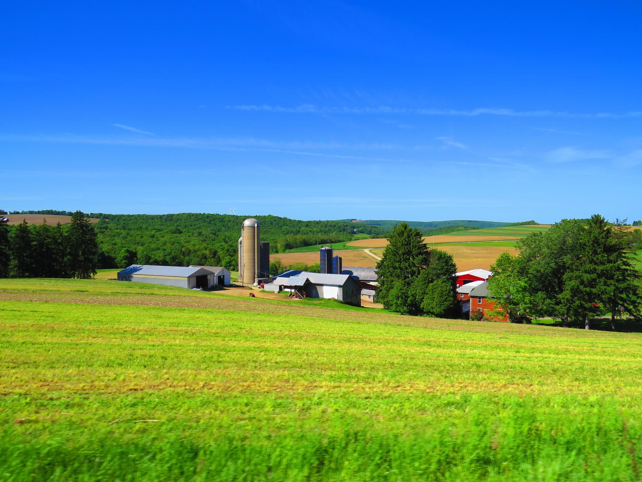 Farmland by Becky Krug