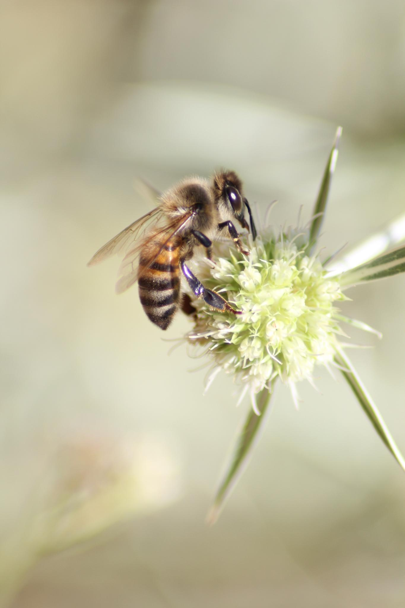 bee by third_down
