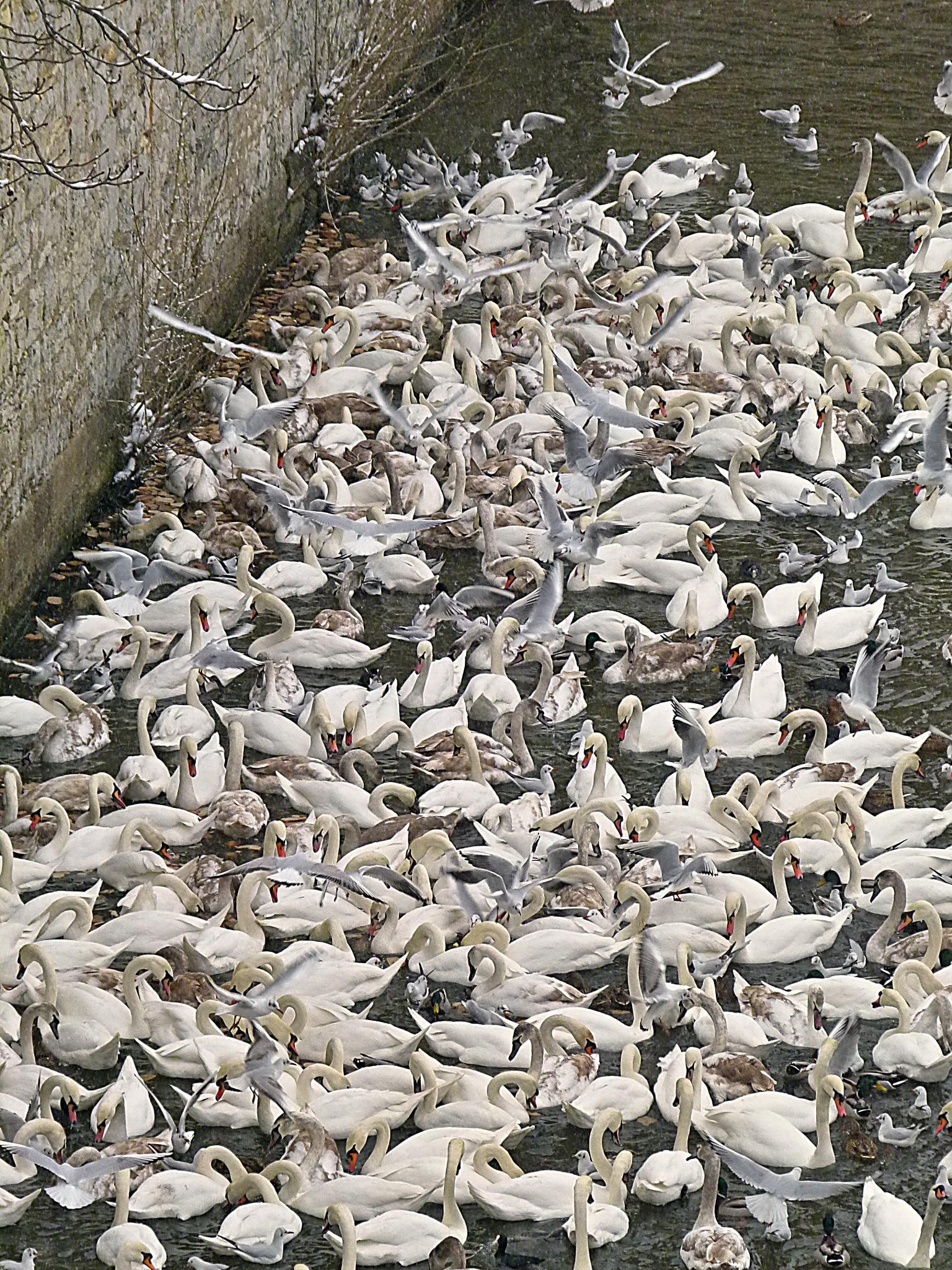 A flock by Michal Vrtílek