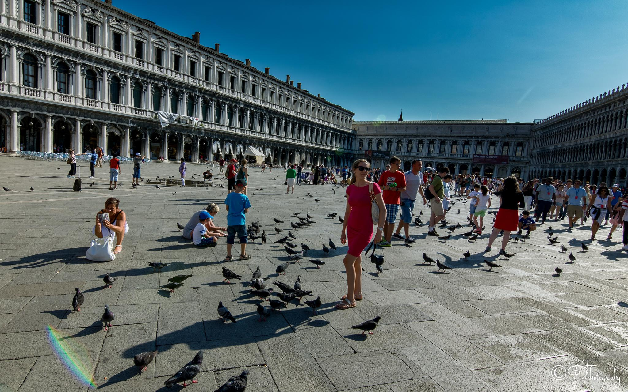 Photo in Urban #sqaure #piazza #piazza san marco #venezia #venice #cityscape #urban #pigeons #italy